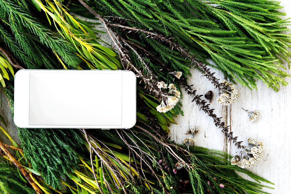 Mobile phone on top of fir leaves