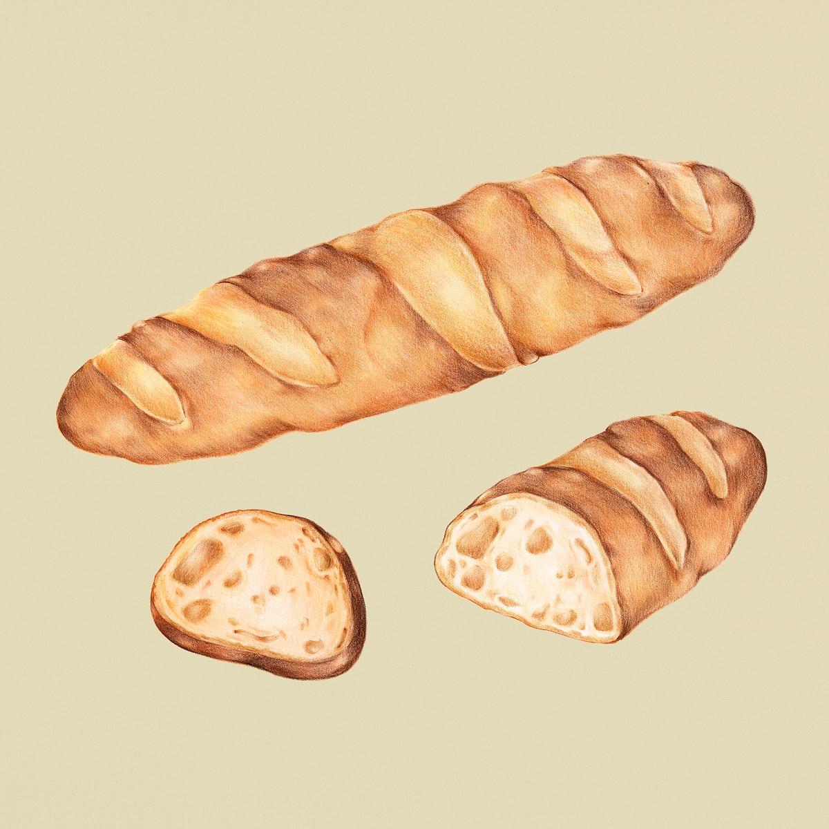 Freshly baked baguette hand-drawn illustration