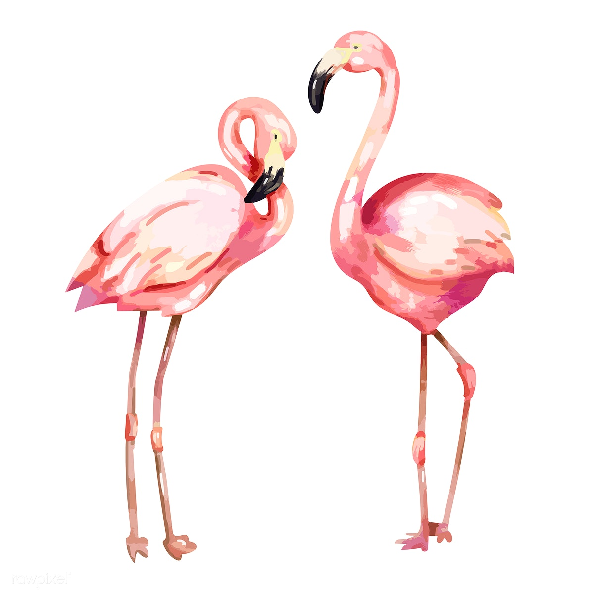 Hand Drawn Pink Flamingo Illustration Royalty Free Stock