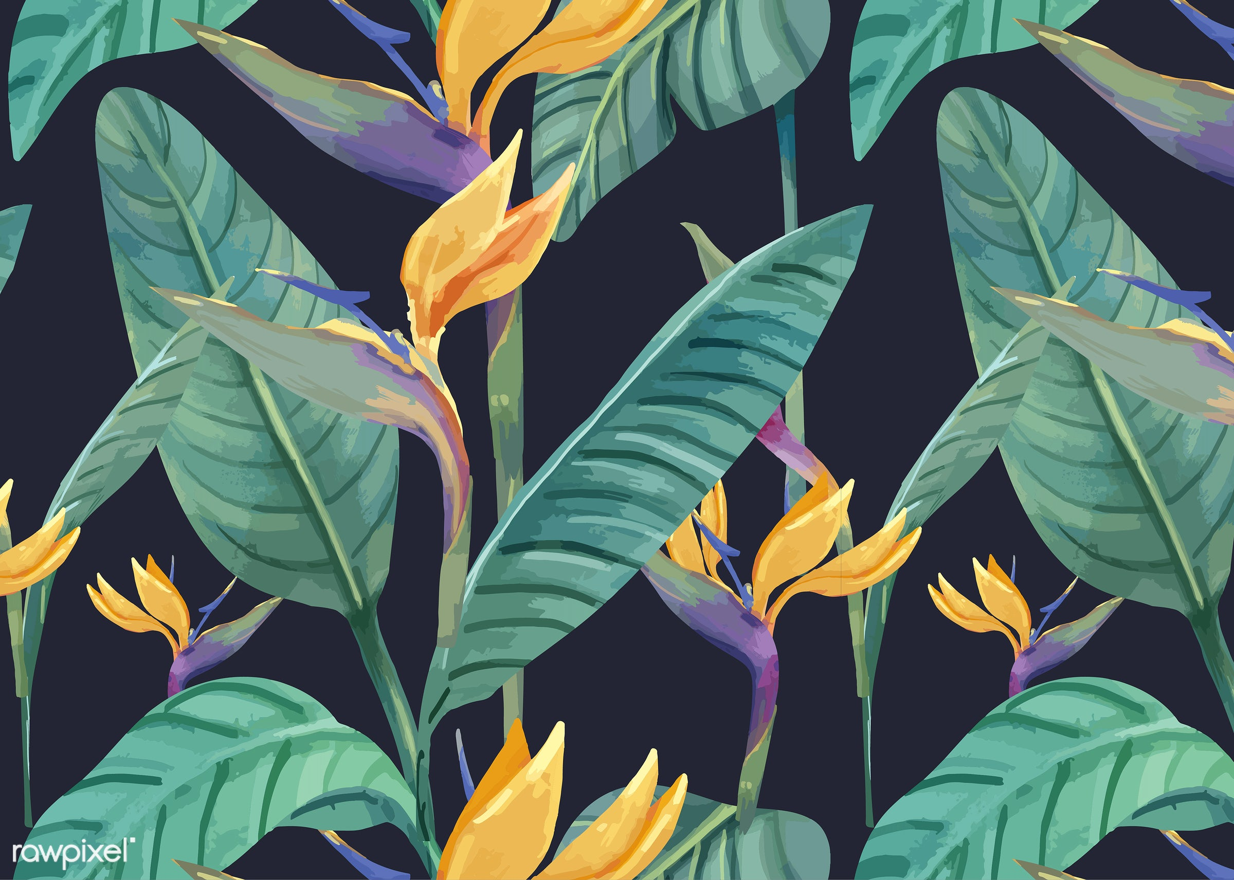 Hand drawn bird of paradise pattern - artwork, background, beautiful, bird of paradise, bloom, blooming, blossom, botanic,...