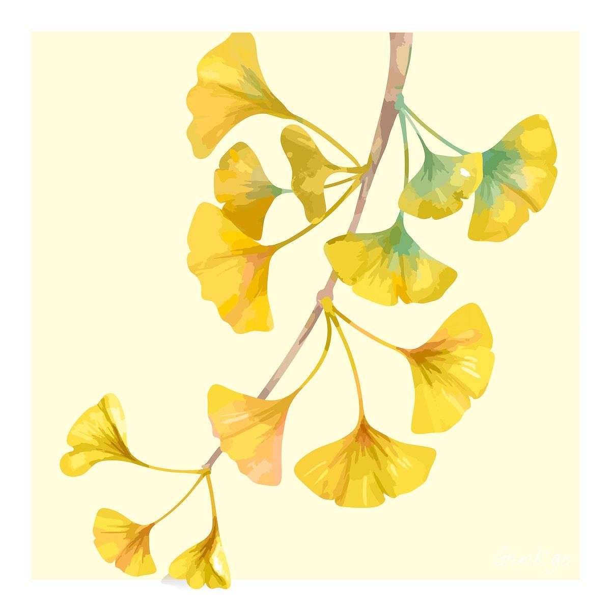 Hand drawn ginkgo flower illustration