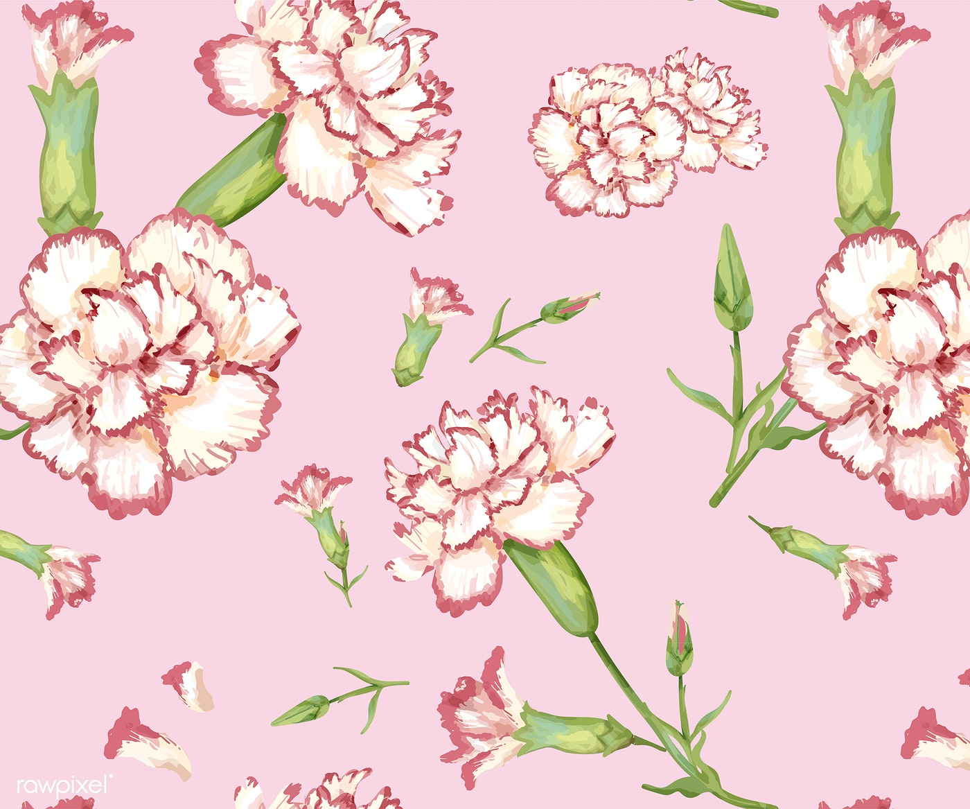 Hand Drawn Carnation Pattern Background Royalty Free Vector 421575