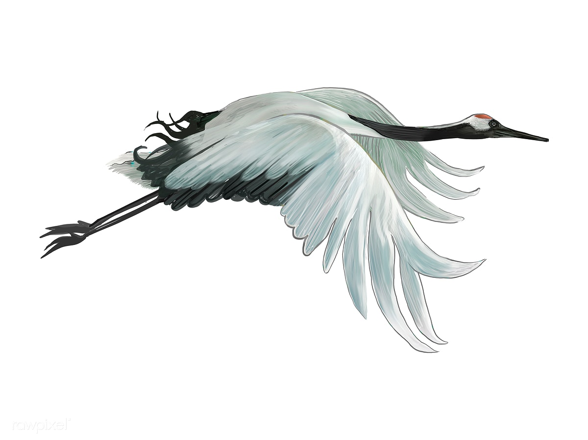 Download premium illustration of Flying elegant white Japanese crane 449883