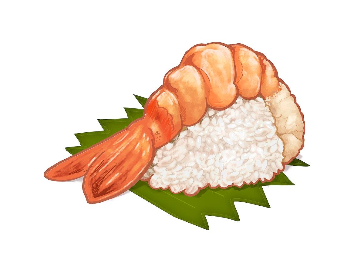 Hand drawn Japanese shrimp sushi or ebi nigiri