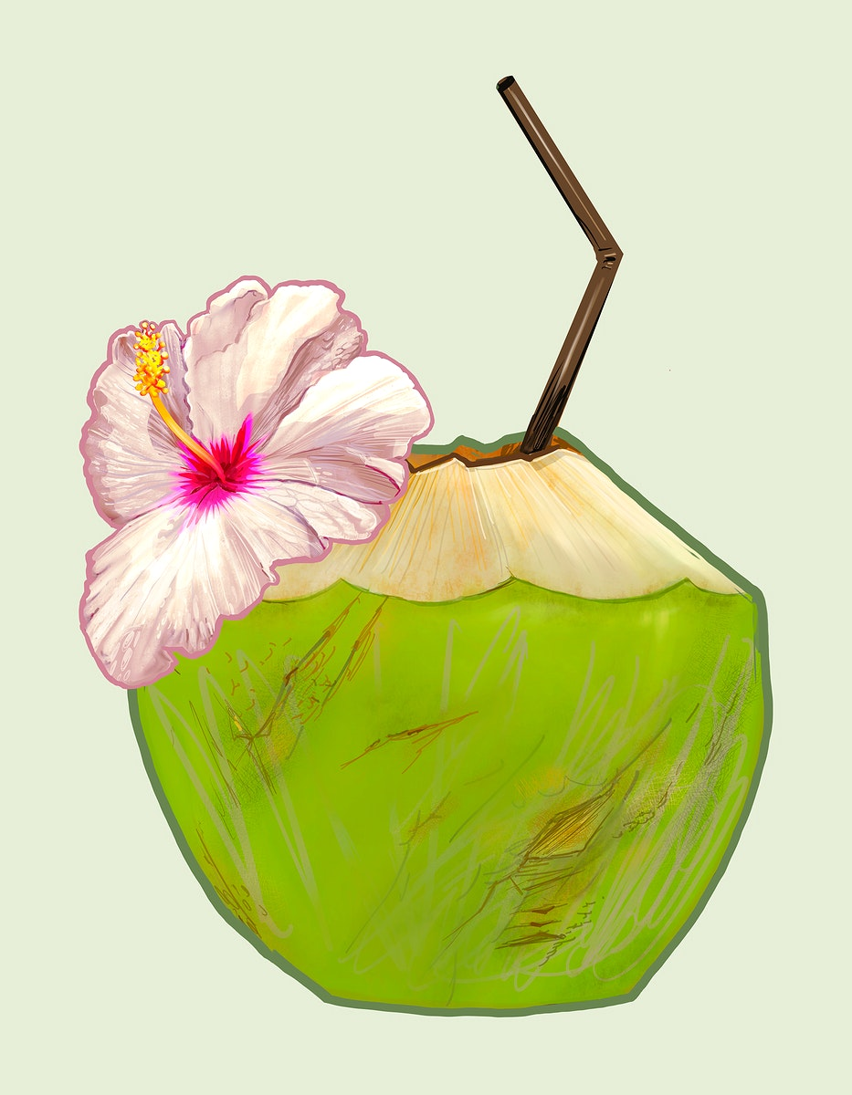 Tropical fresh young coconut illustration