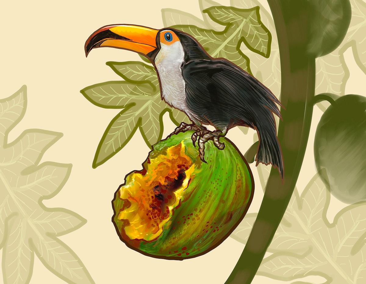 Hornbill bird on a coconut illustration