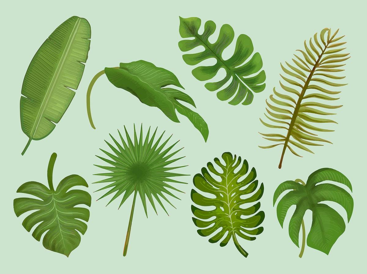 Set of tropical leaf illustrations