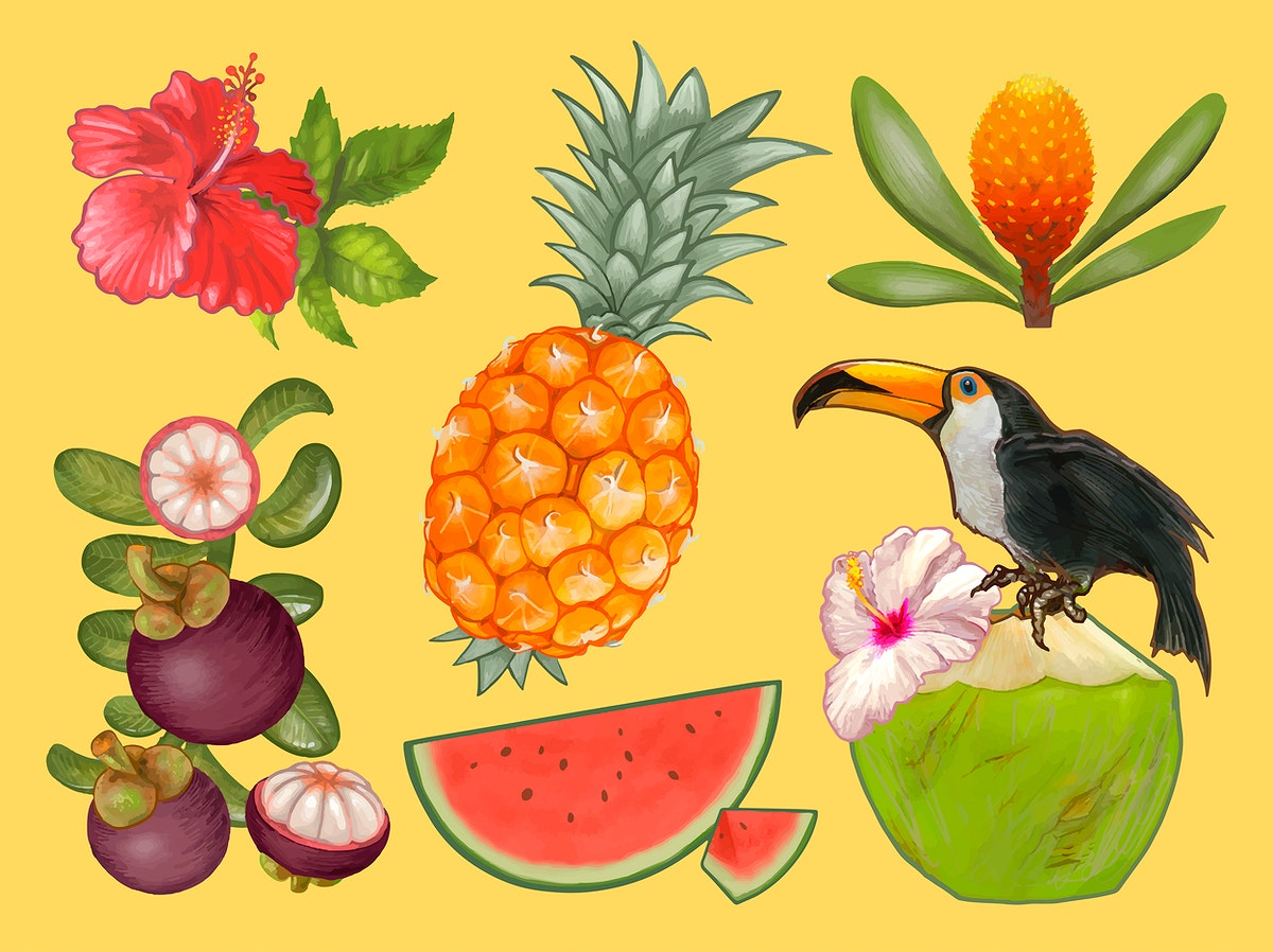 Tropical fruits and flower illustration