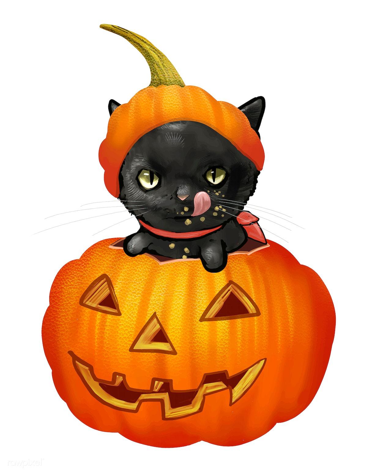 Halloween Pumpkin Vector.Illustration Of A Black Cat In Pumpkin Vector Free Stock