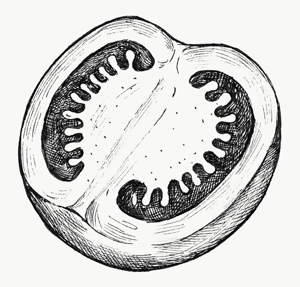 Half tomato ink drawing | Free stock illustration - 1200283