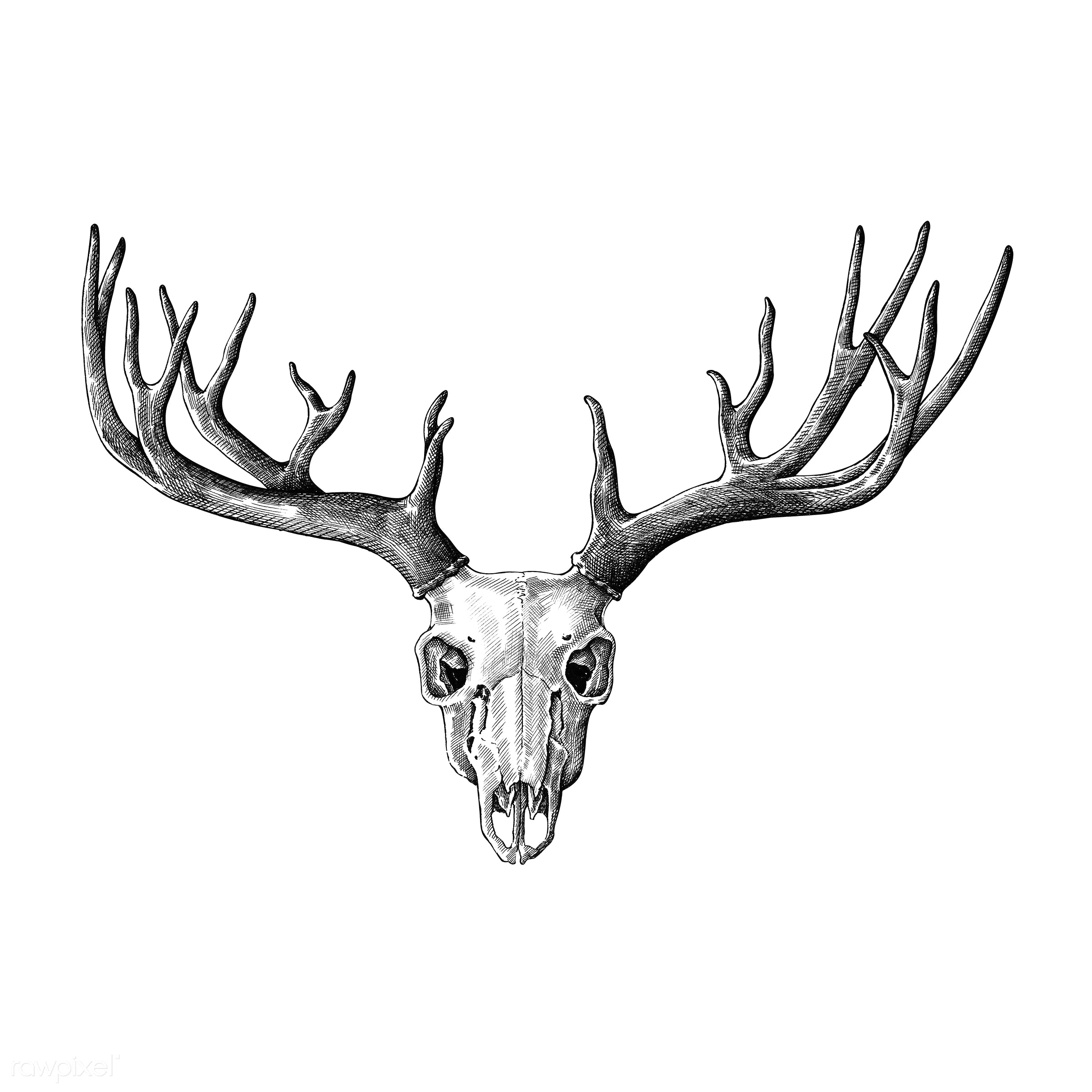 Hand drawn deer antler isolated - ID: 410948