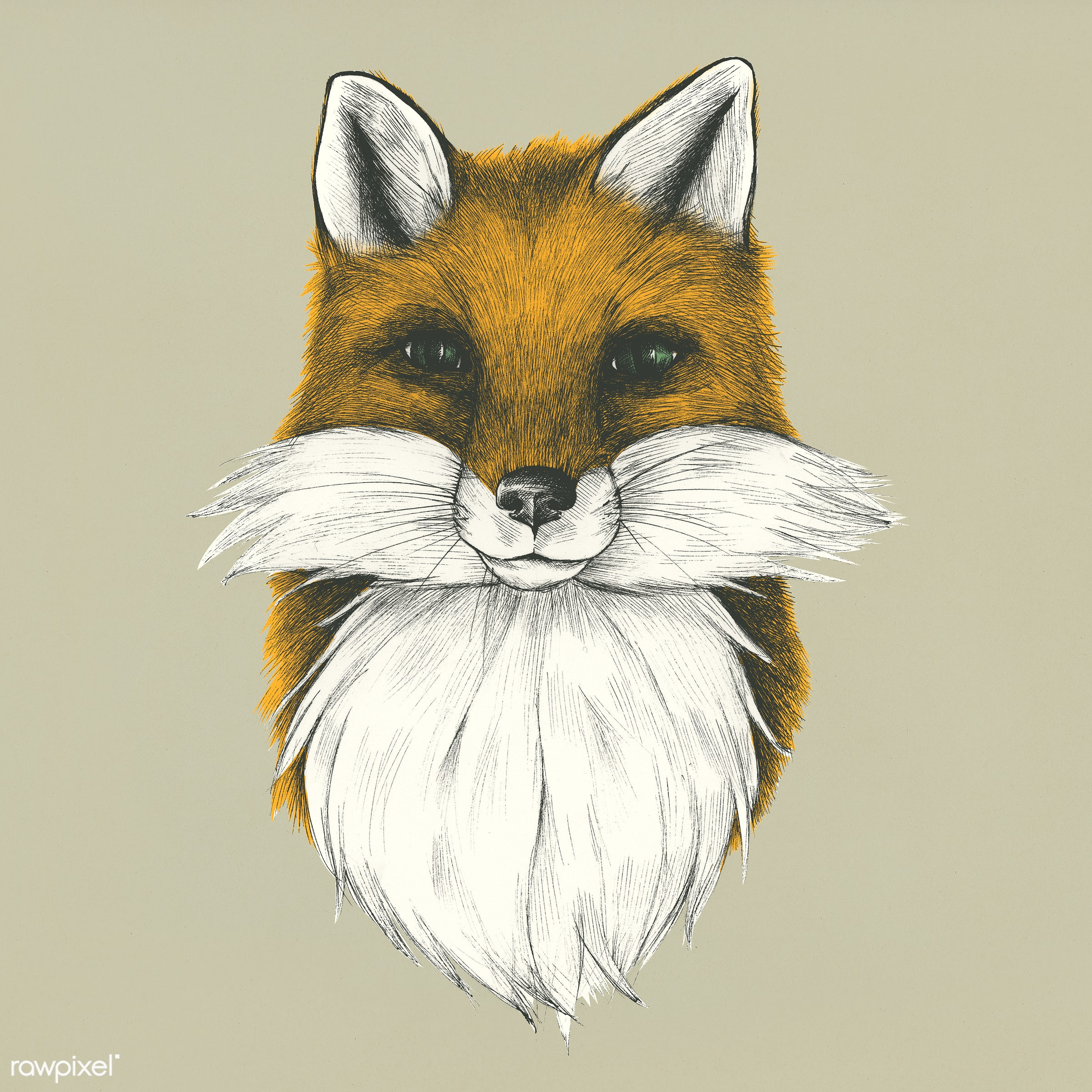 Hand drawn fox isolated on background - vector, sketch, fox, illustration, hunting, antique, animal, artwork, beast, brown...
