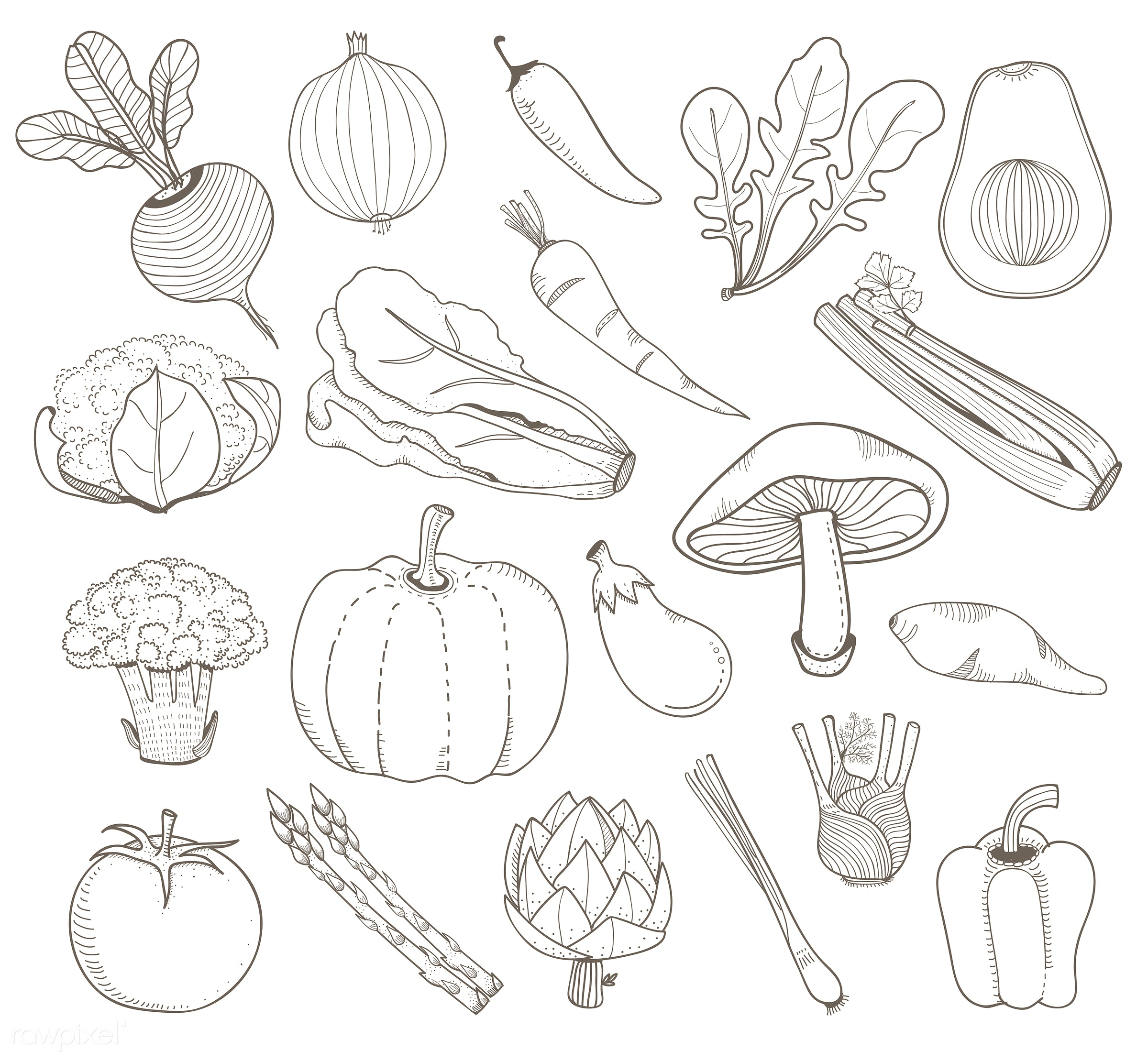 Vector of different kinds of vegetables - collection, design, doodle, farmers, food, graphic, illustration, isolated,...