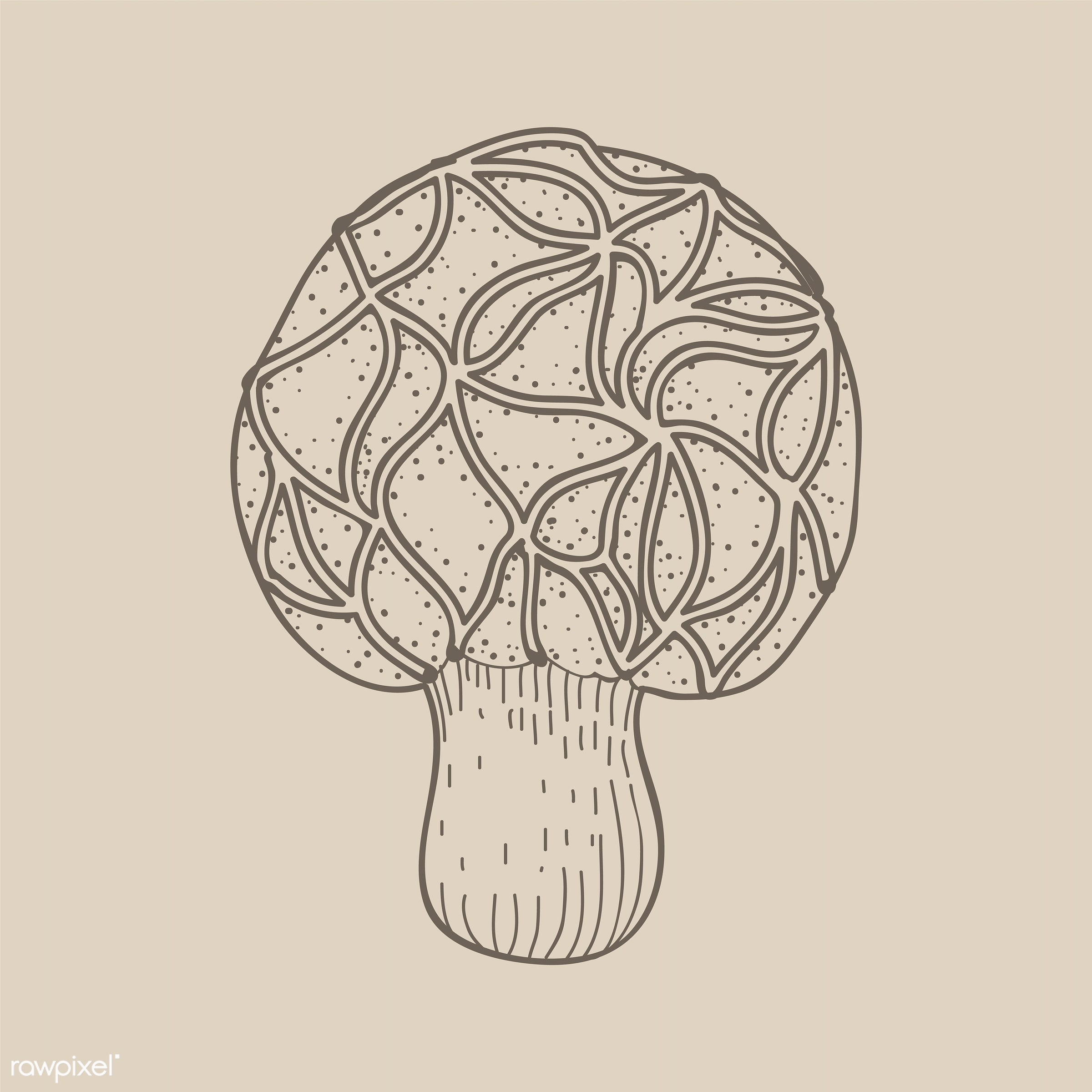 Vector of mushroom - design, doodle, farmers, food, graphic, illustration, isolated, mushroom, organic, vector, vegan,...