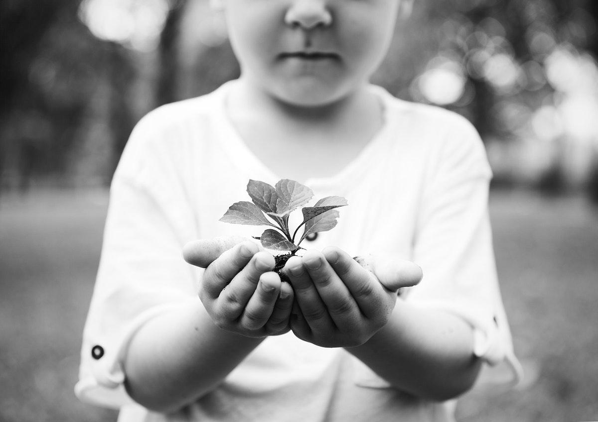 Little boy holding a plant