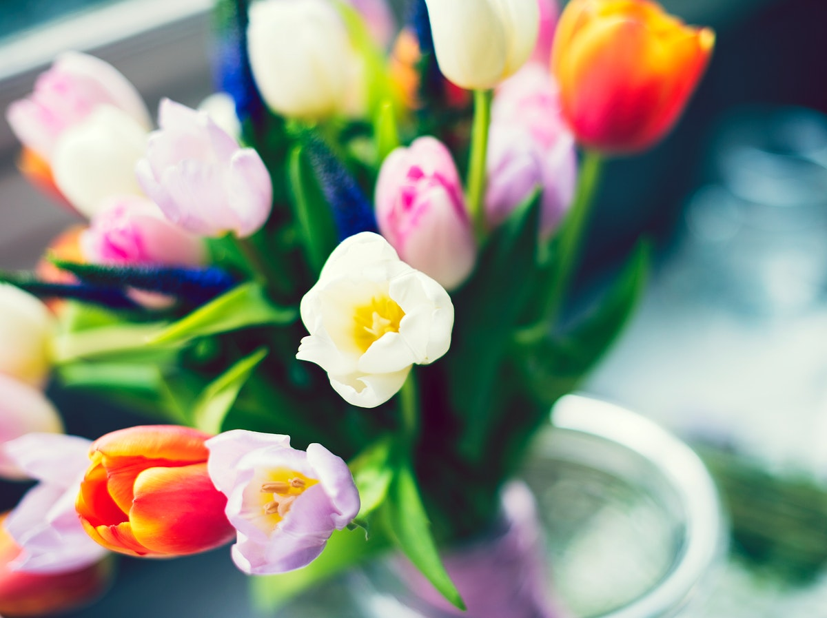 Bouquet of colorful blooming tulips