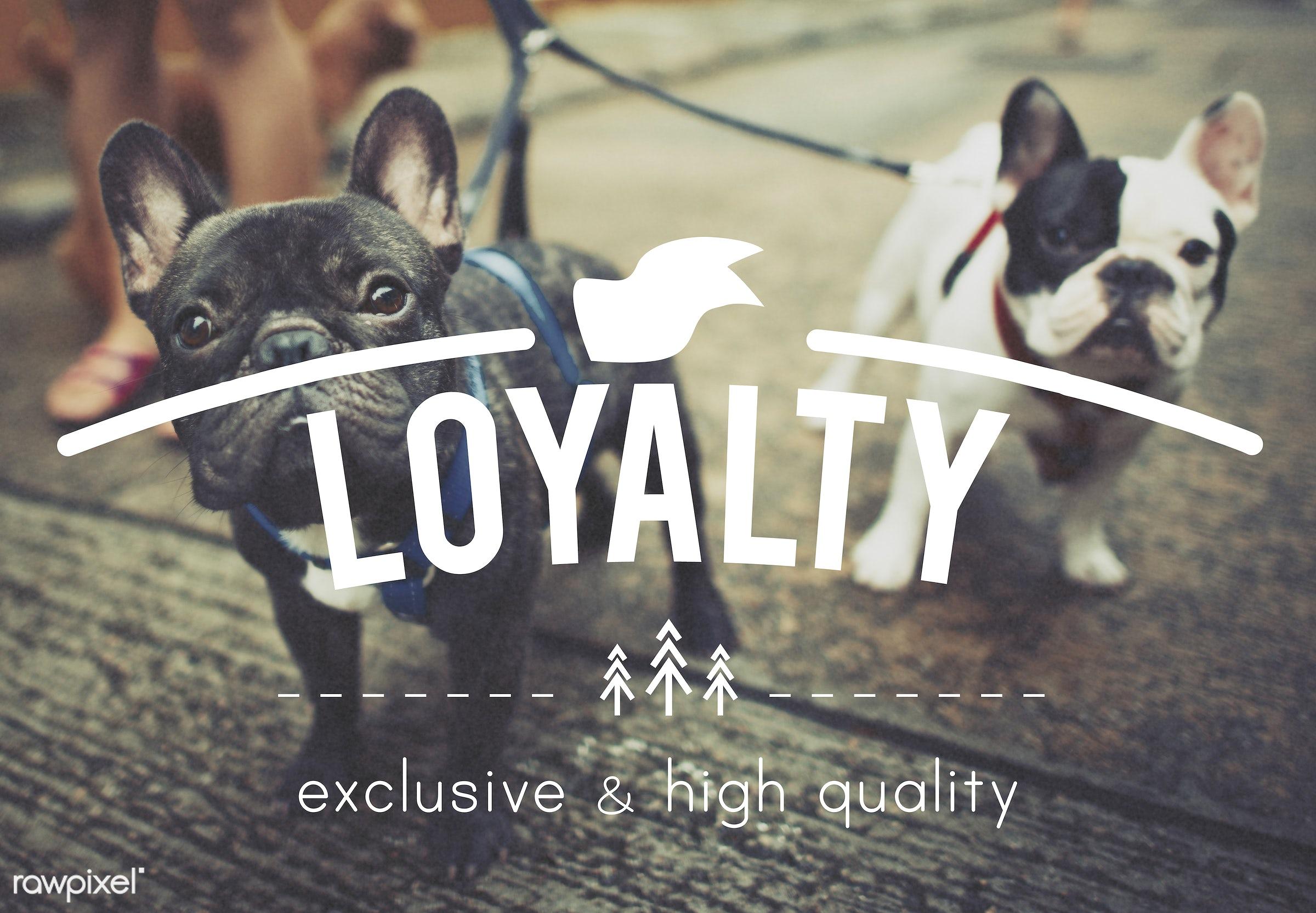 loyalty, adorable, animal, attitude, babies, belief, breed, bulldog, cute, devotion, dog, french bulldog, friends, fun,...