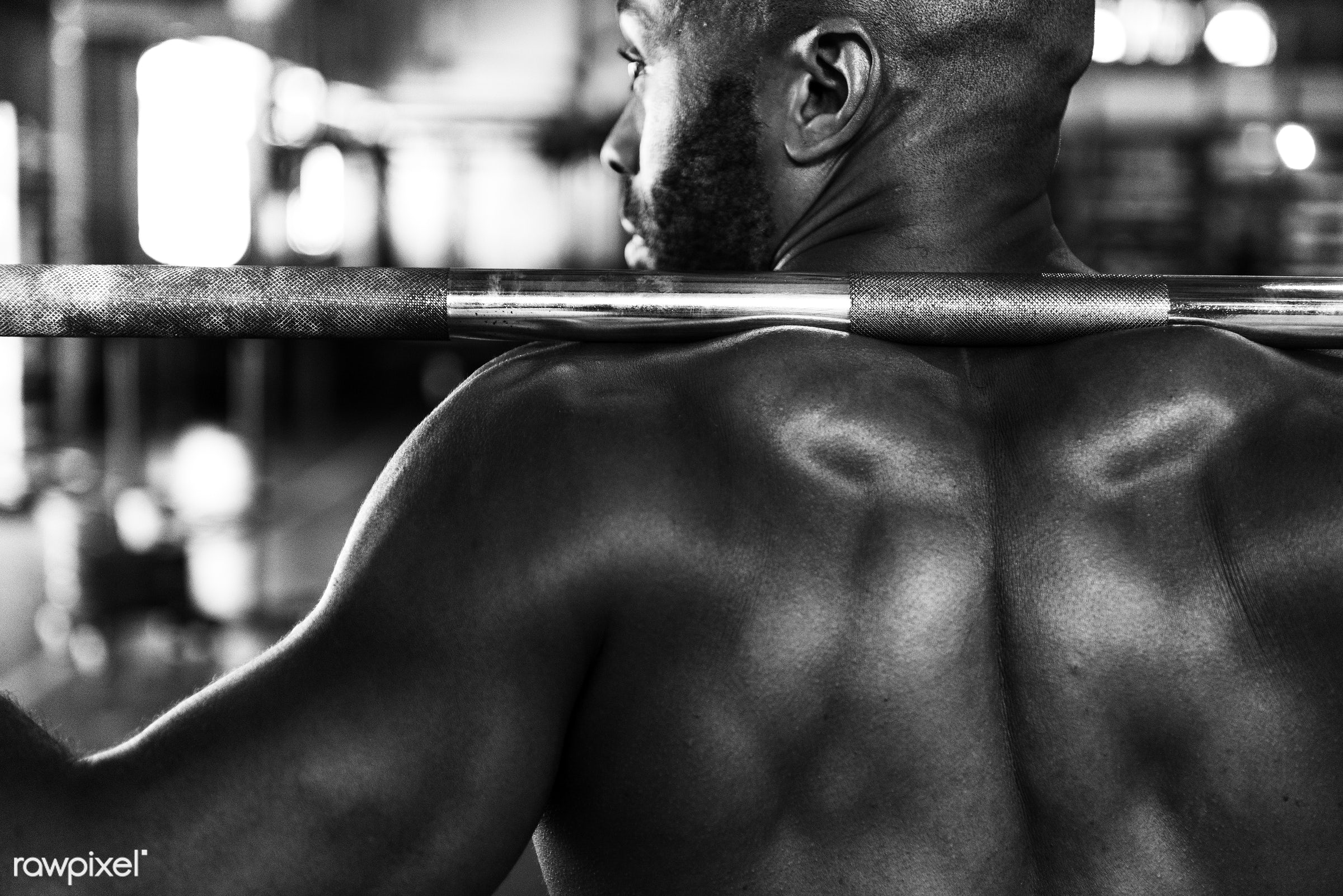 At the gym - active, activity, african descent, athlete, athletic, back, barbell, body, buff, concentration, equipment, fit...
