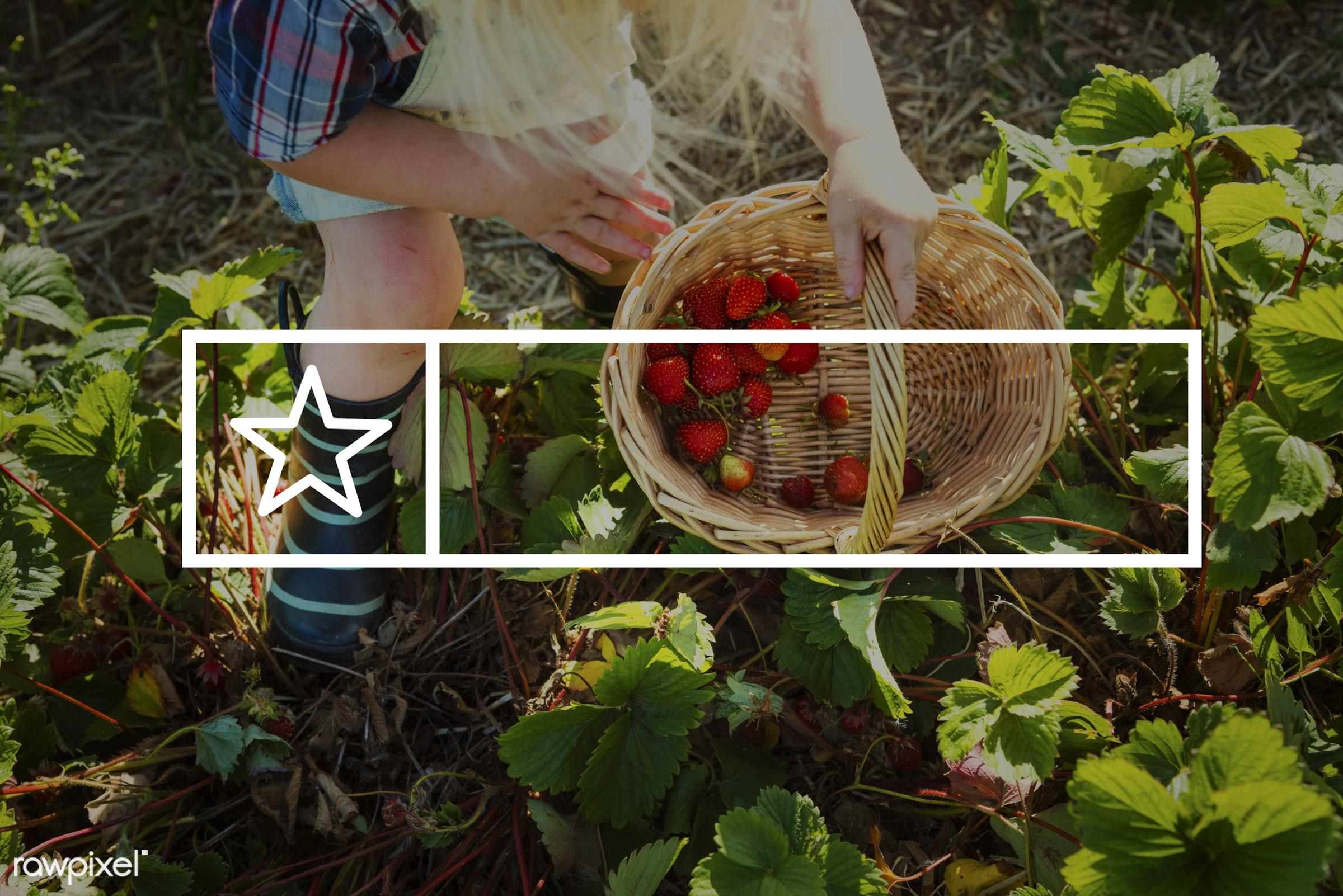 badge, banner, basket, blank, blonde, boy, caucasian, copy space, dungarees, farm, fruit, fun, holding, label, little,...