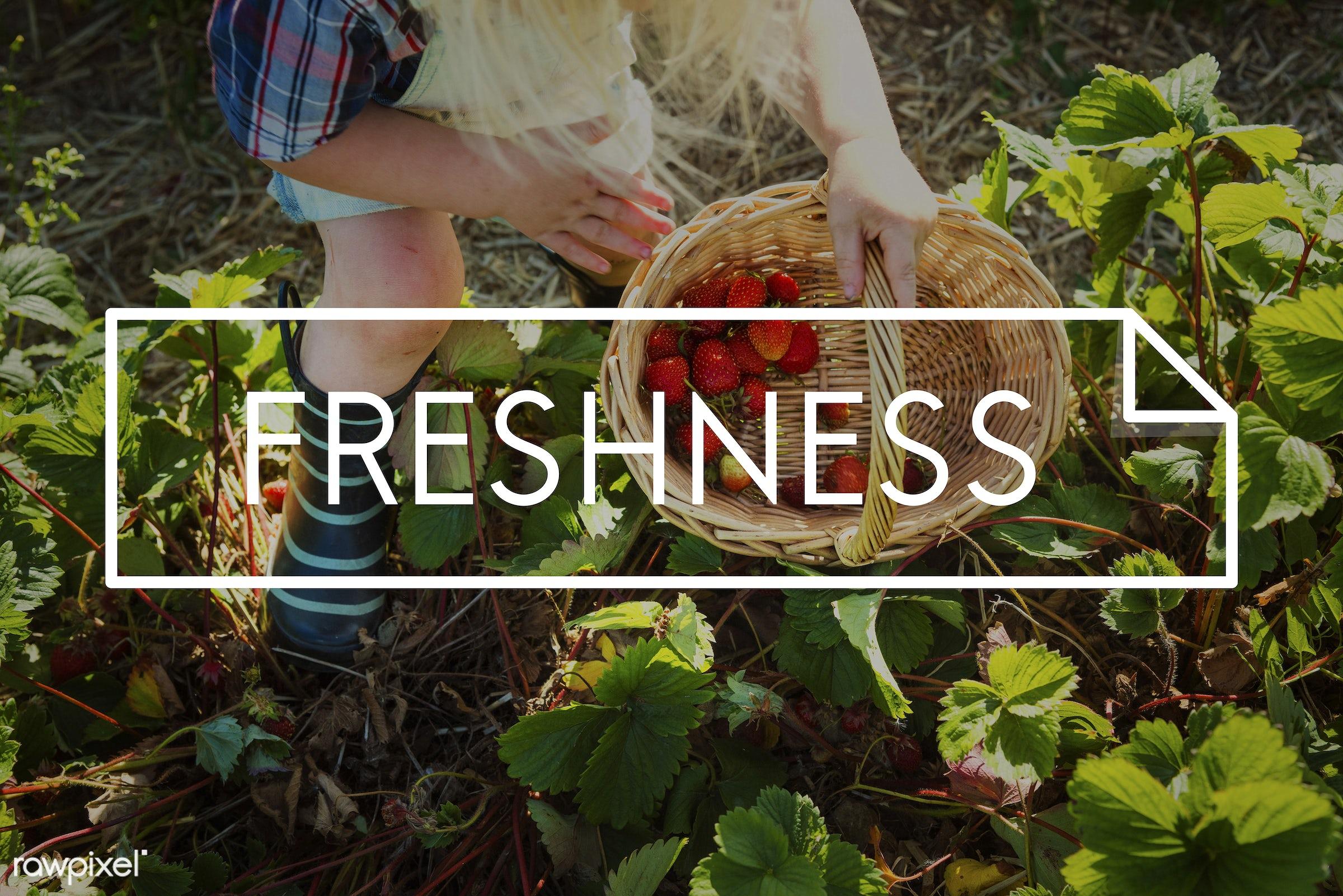 basket, blonde, boy, caucasian, dungarees, eat fresh, farm, freshly picked, freshness, fruit, fun, gardening, healthy,...