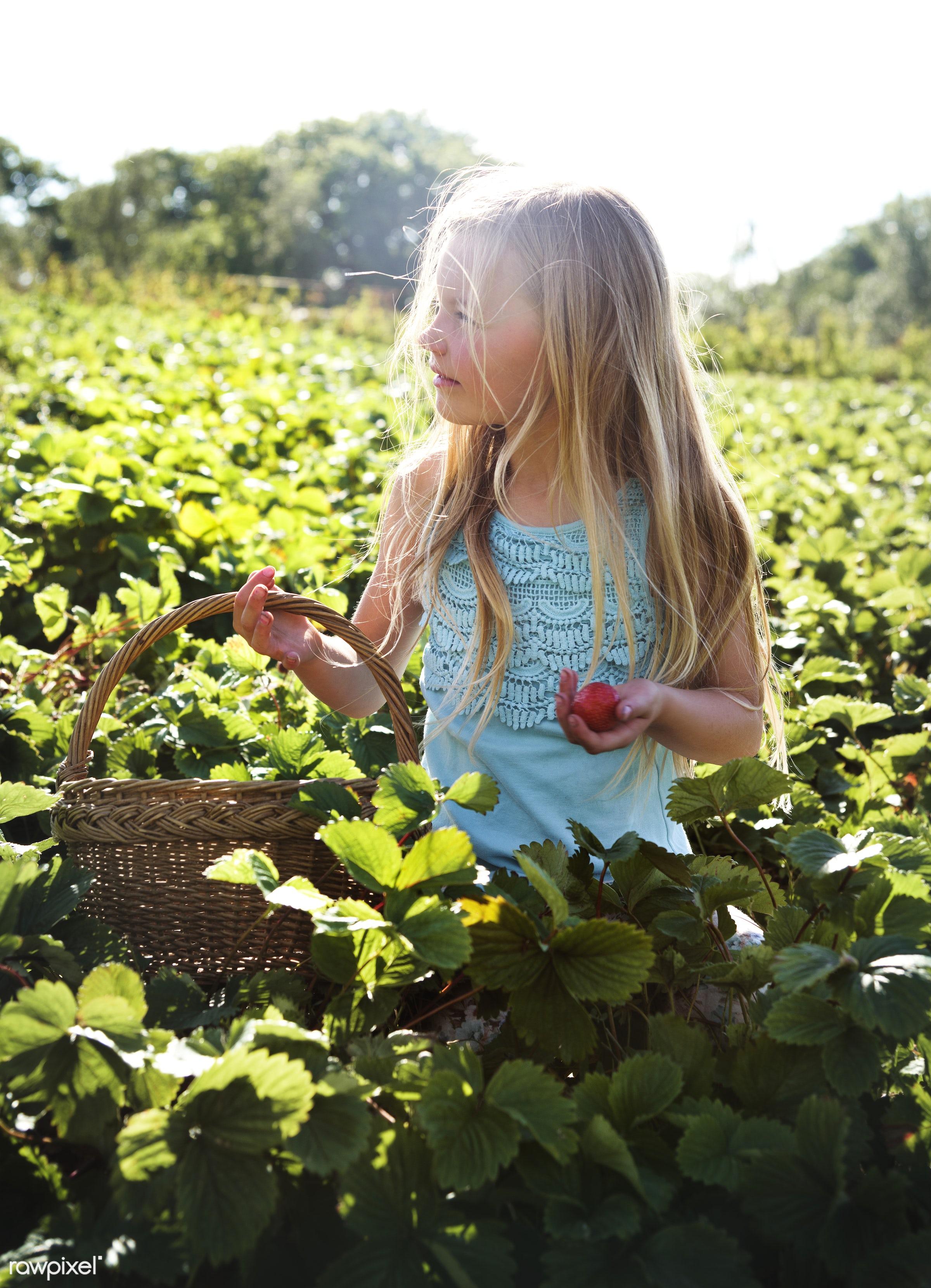 Kid in strawberry farm - alone, backyard, botany, caucasian, countryside, cultivate, field, fresh, fruit, garden, gardener,...
