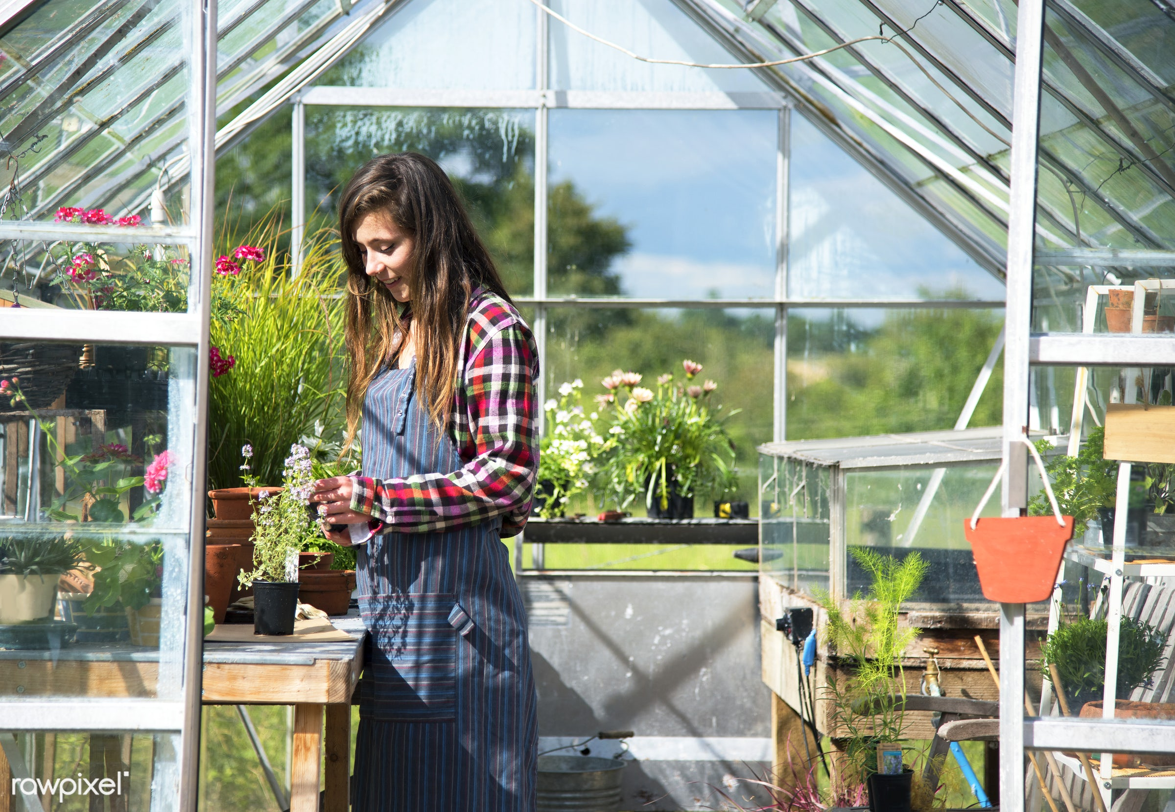 Young woman in the glass greenhouse - greenhouse, agriculture, backyard, bloom, botanical, botany, building, cares,...