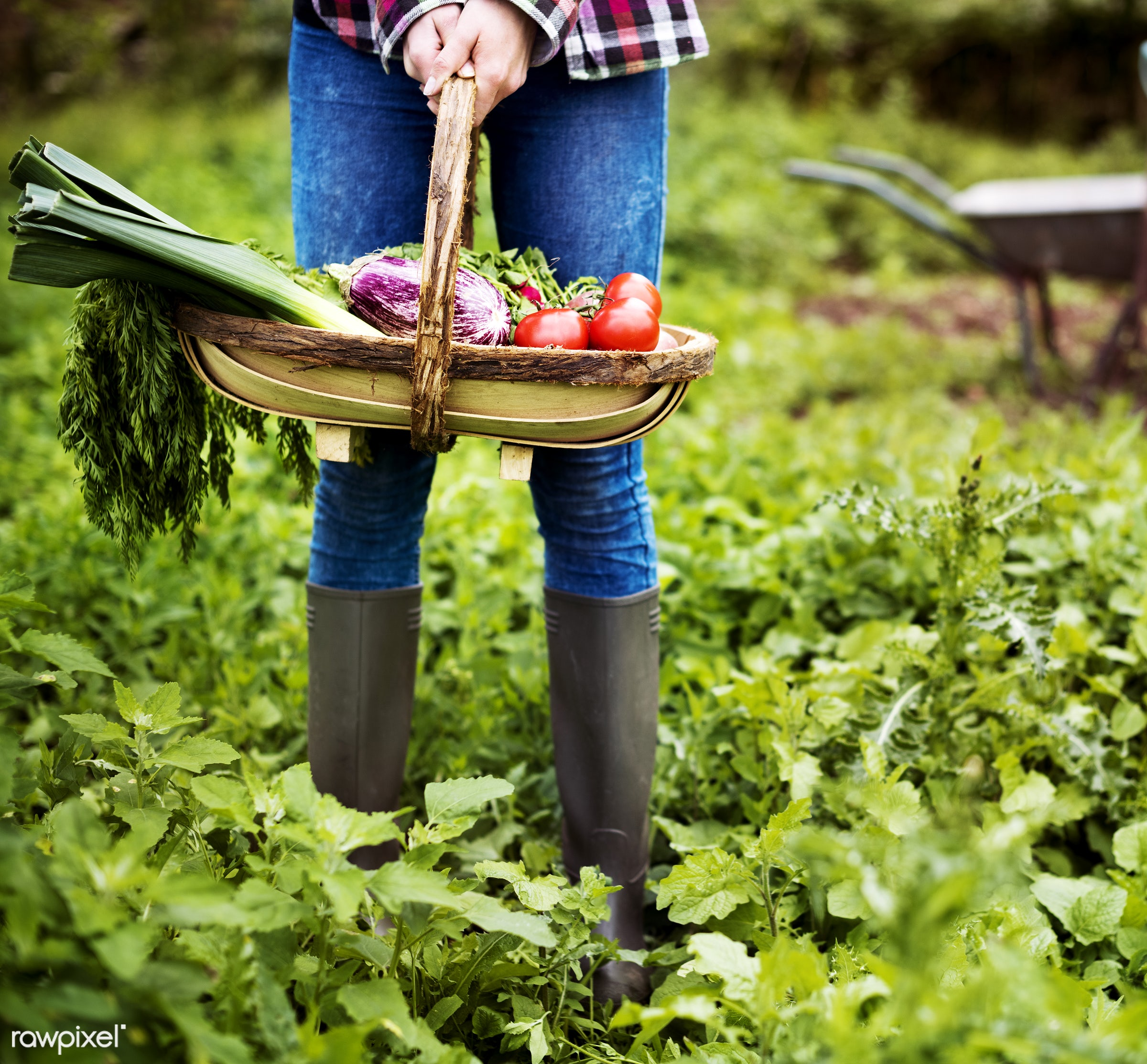 Vegetable farm - farm, garden, countryside, gardening, adult, boots, botanical, botany, country, cultivate, cultivating,...