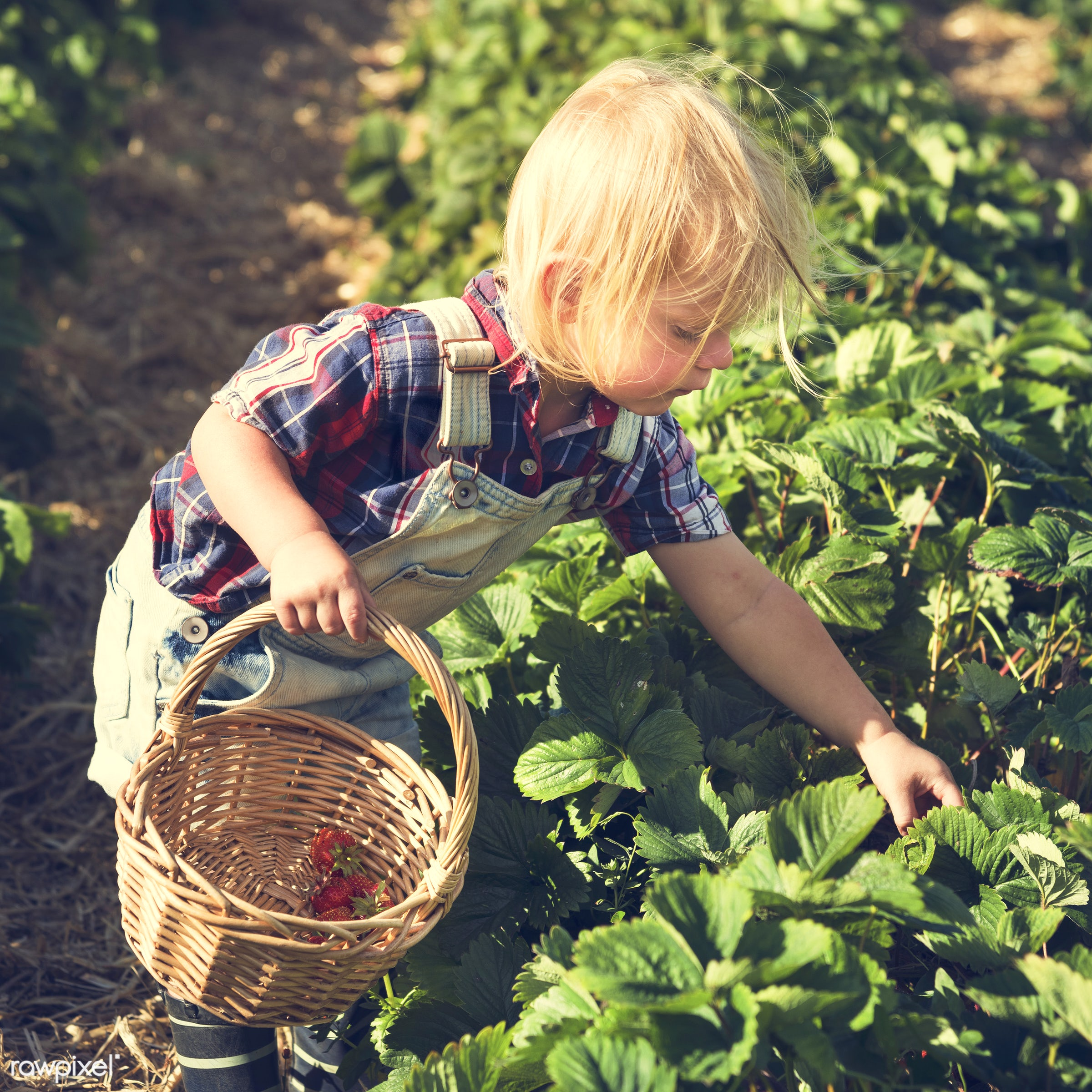 arboretum, backyard, bloom, blooming, botanical, botany, boy, country, countryside, cultivate, cultivating, flora, garden,...
