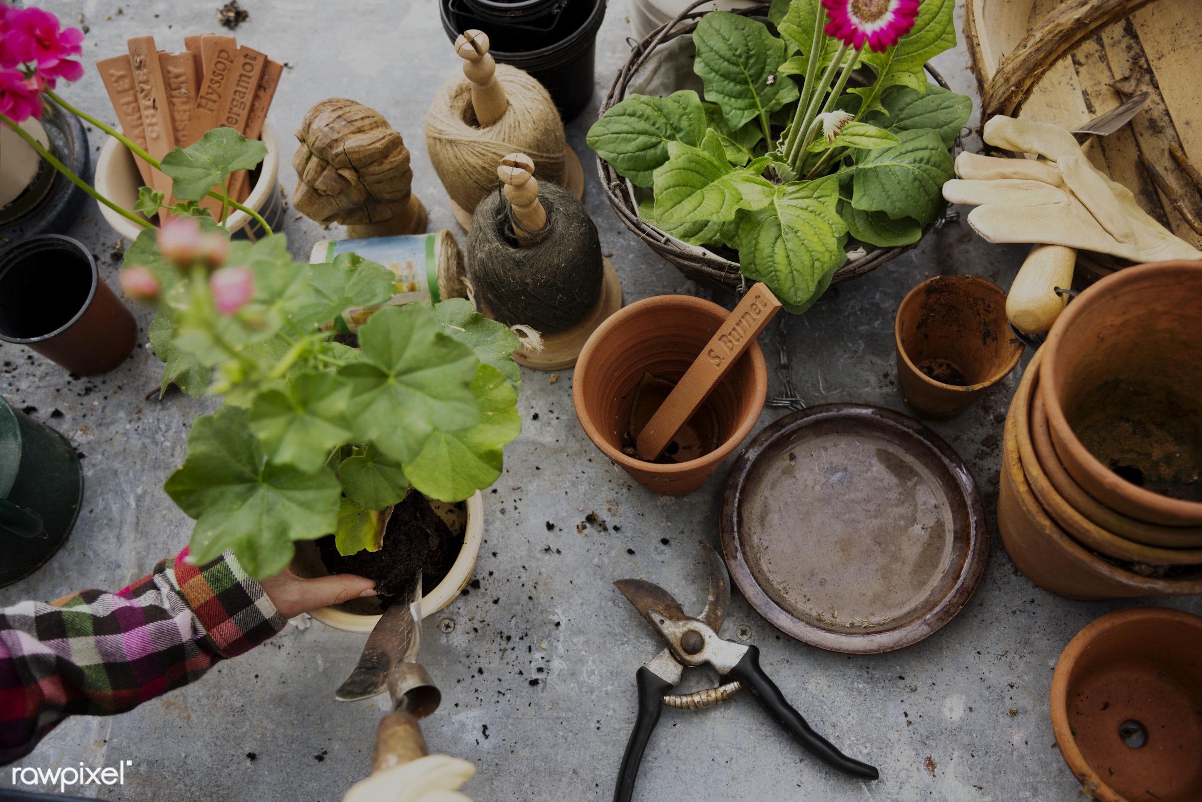 Hands planting flower in a pot - aerial, closeup, flora, flowers, fresh, garden, gardener, gardening, growing, hands, hobby...