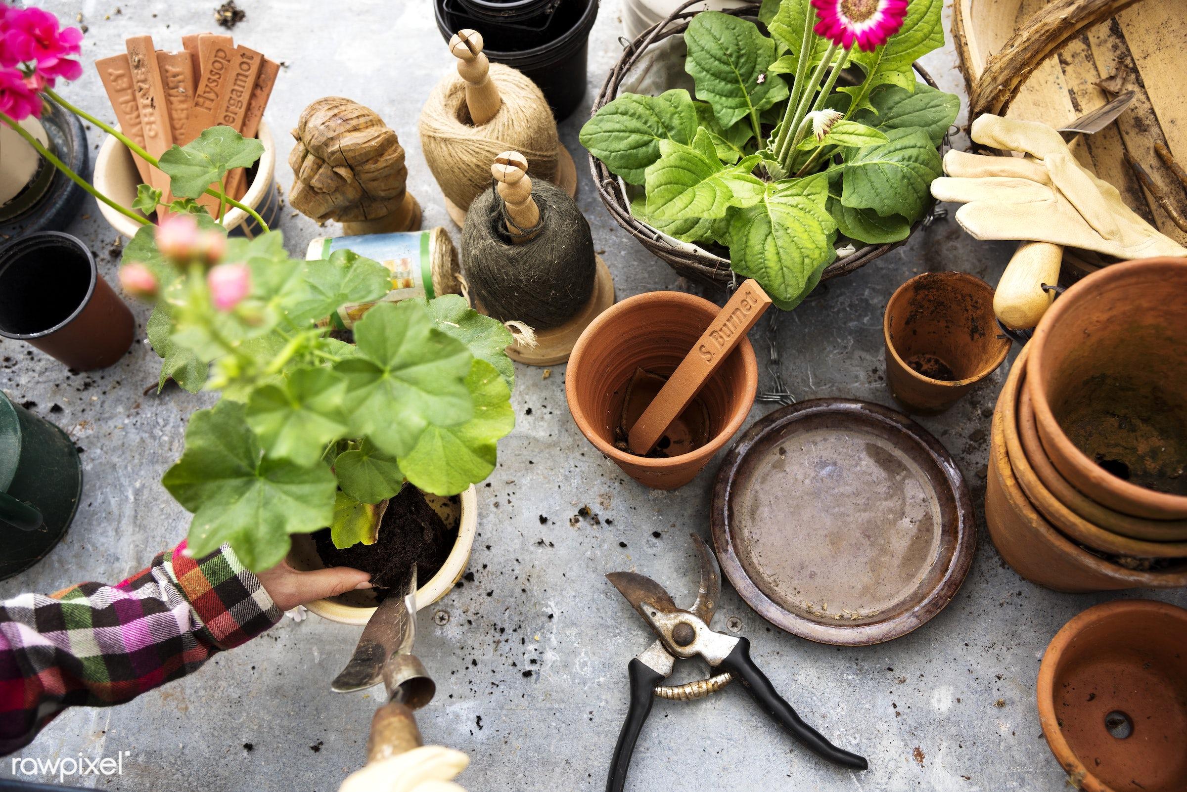 aerial, closeup, flora, flowers, fresh, garden, gardener, gardening, growing, hands, hobby, leisure, nature, plants, pots,...
