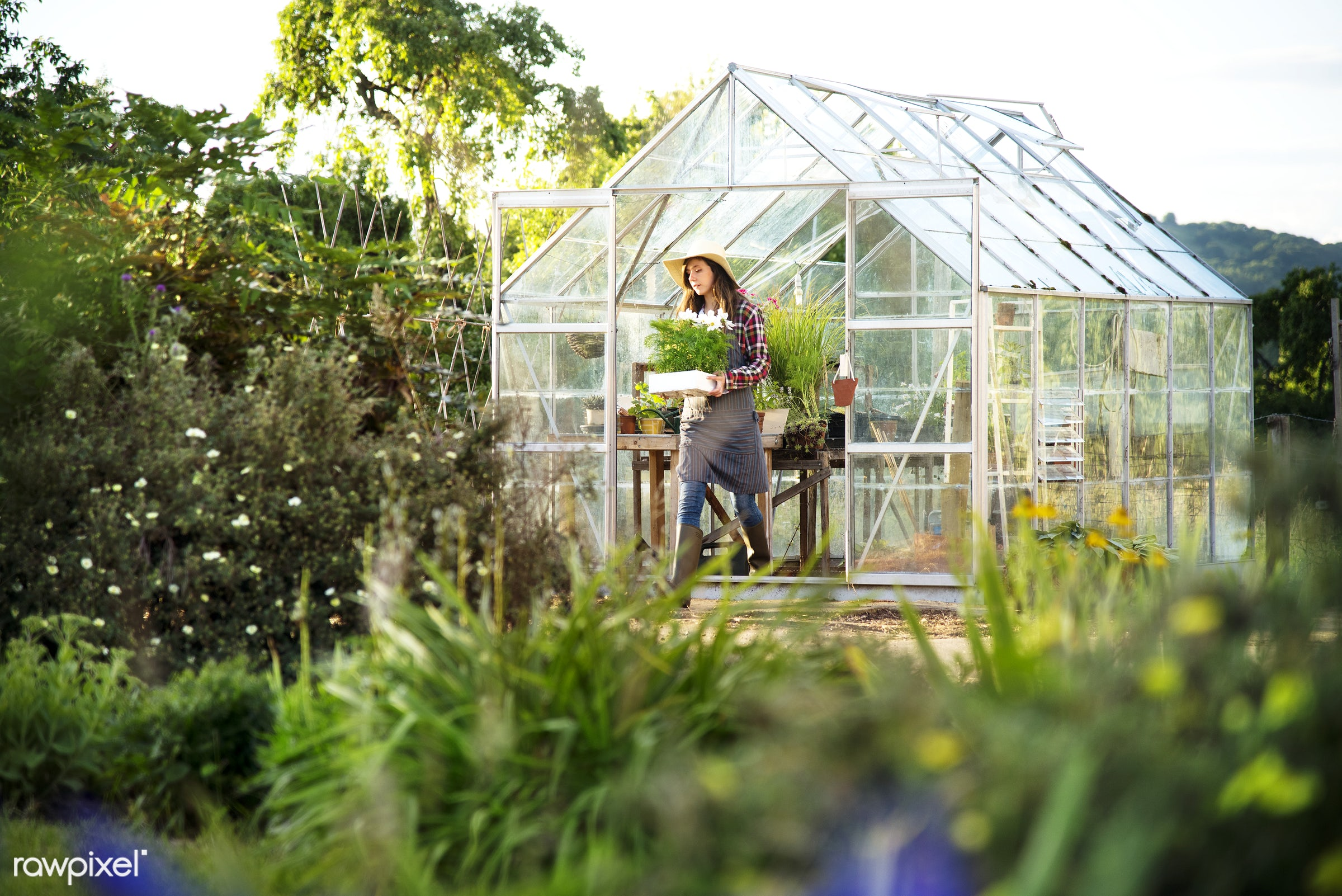 Young woman working at a glass greenhouse - flower, botany, gardener, organic, agriculture, backyard, bloom, botanical,...