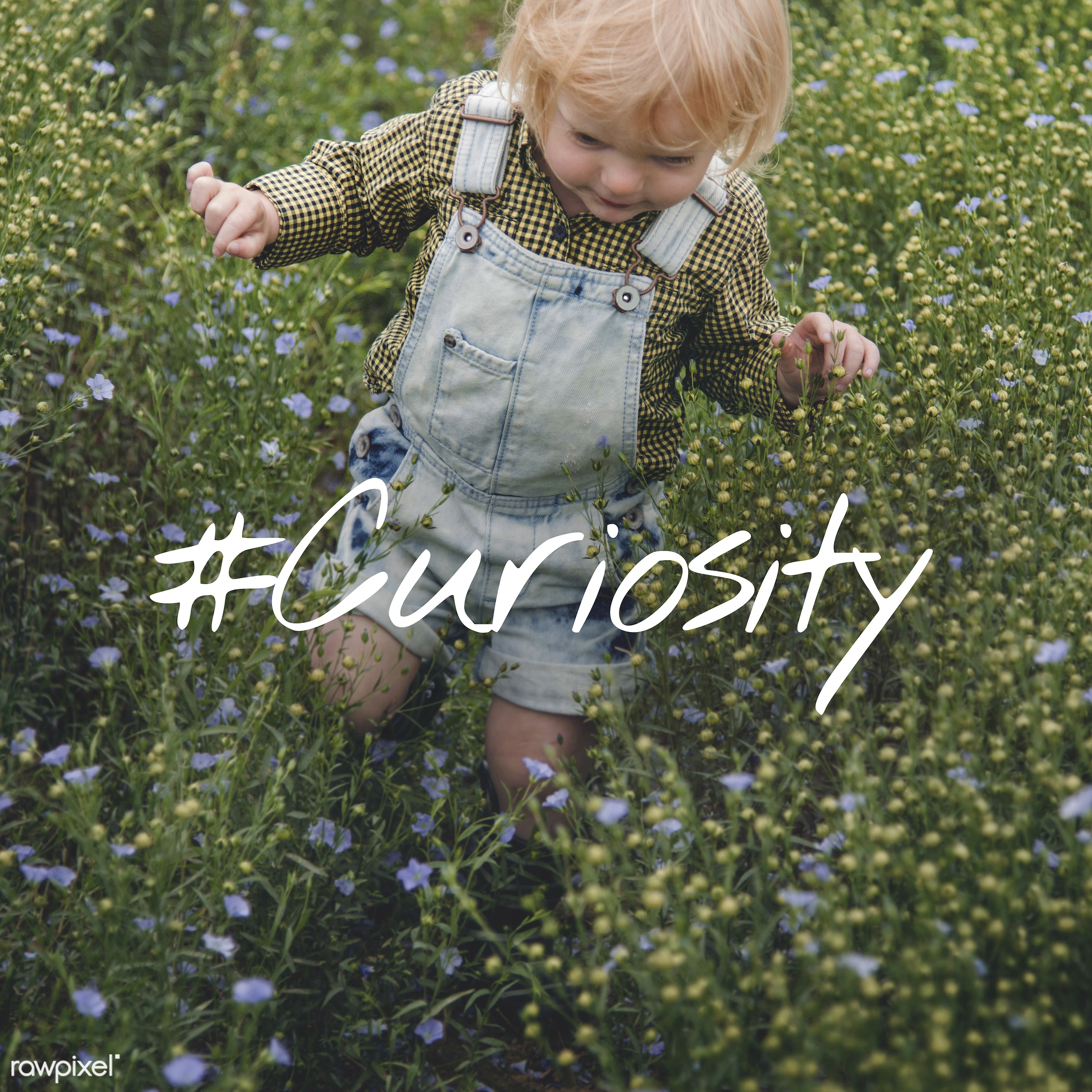 adorable, baby, blameless, blonde, boy, caucasian, child, childhood, children, curiosity, curious, cute, dungarees, flower...