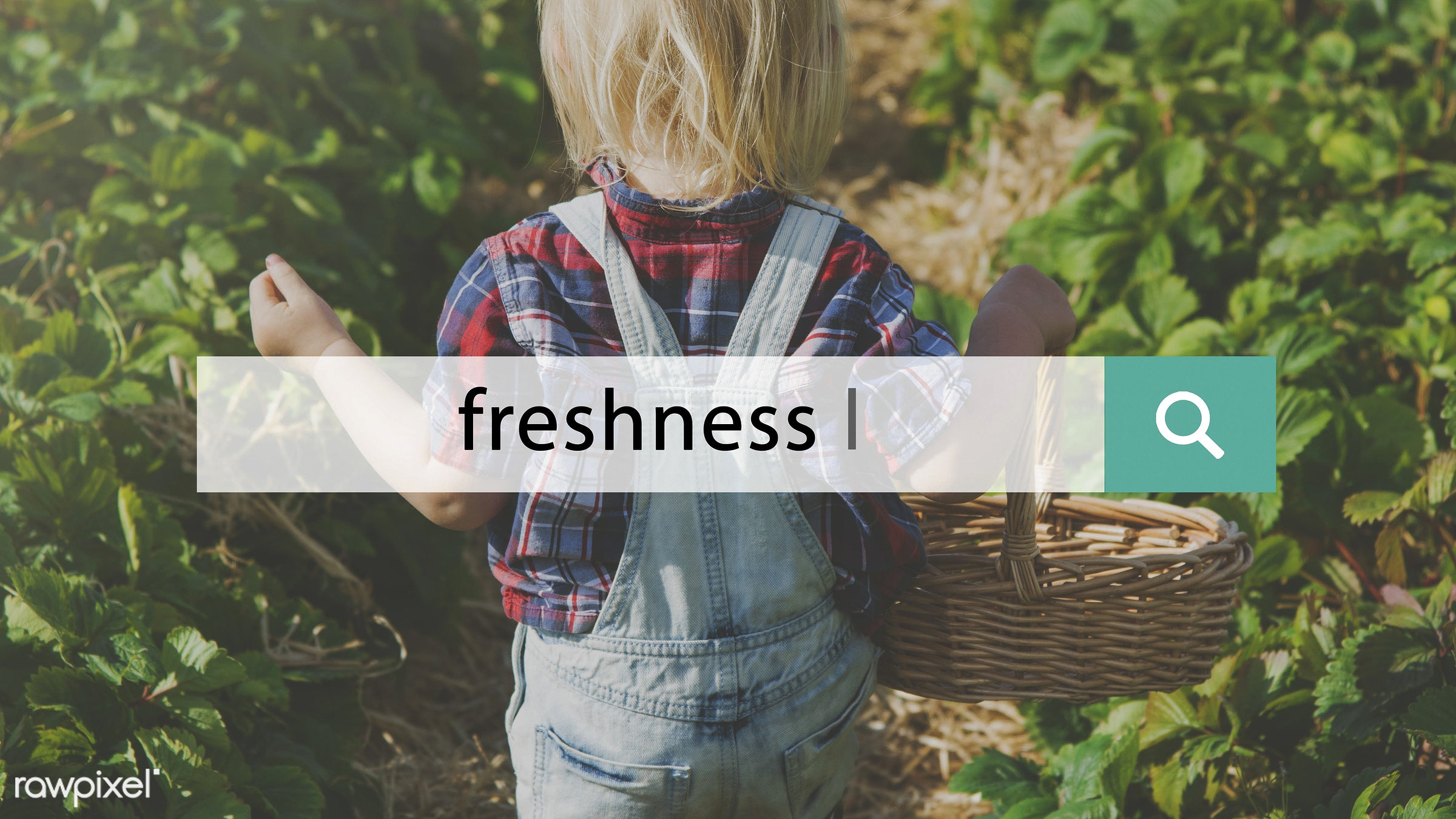 basket, blonde, boy, caucasian, dungarees, eco, ecology, environment, environmental, farm, fresh, freshness, fruit, fun,...