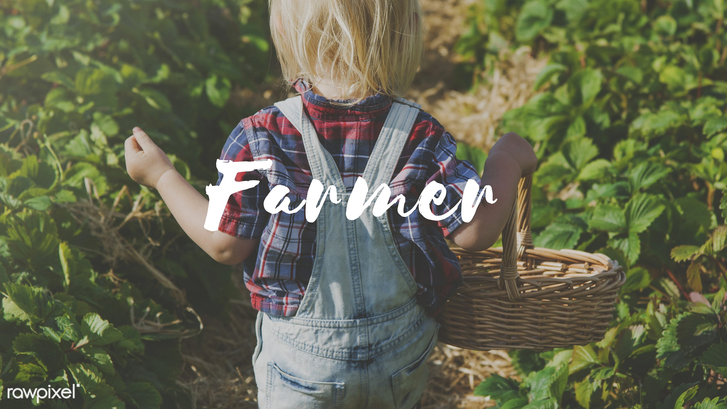 agriculture, basket, blonde, boy, caucasian, country, crops, cultivation, dungarees, farm, farmer, farming, food, fruit, fun...