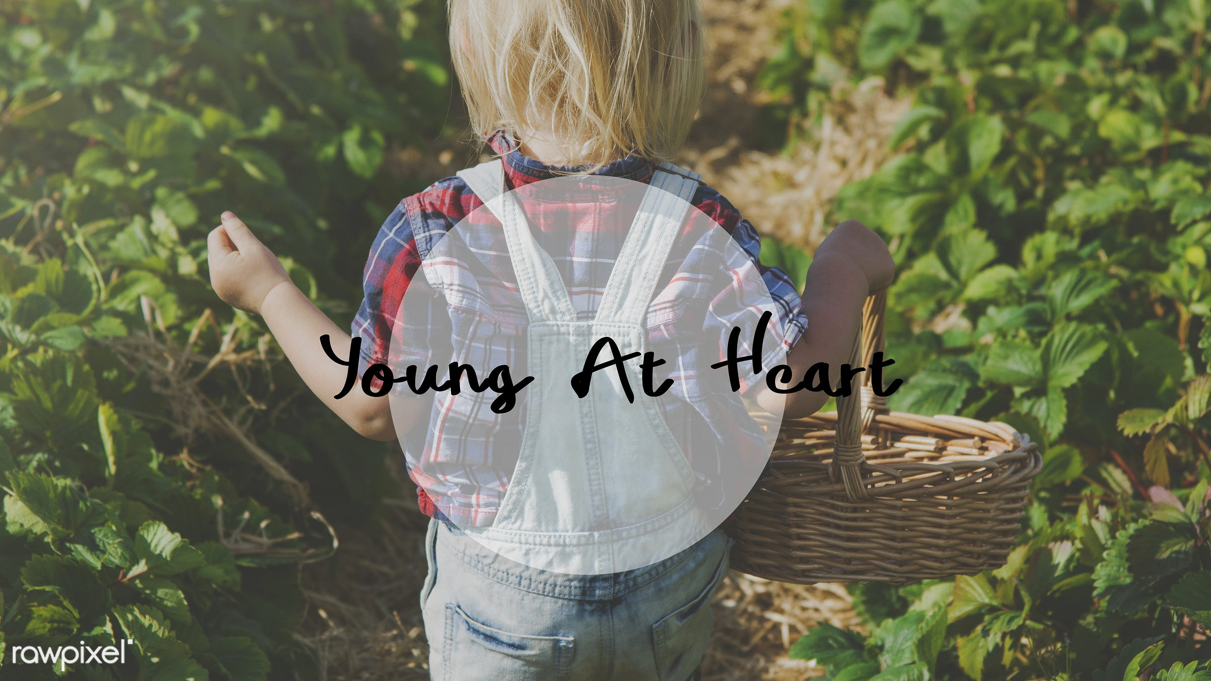appreciate, basket, blonde, boy, caucasian, childhood, delightful, dungarees, enjoy, enjoy life, enjoyment, farm, fruit, fun...