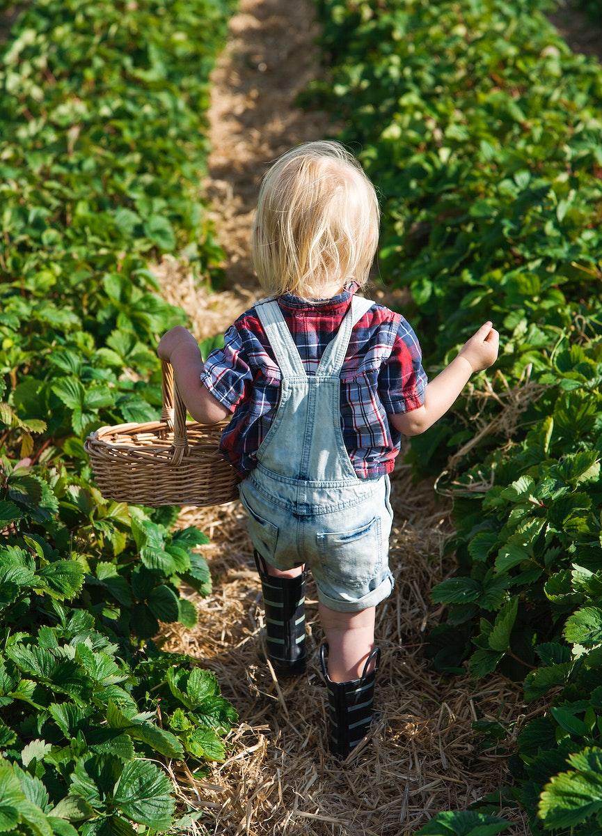 Kid in strawberry farm