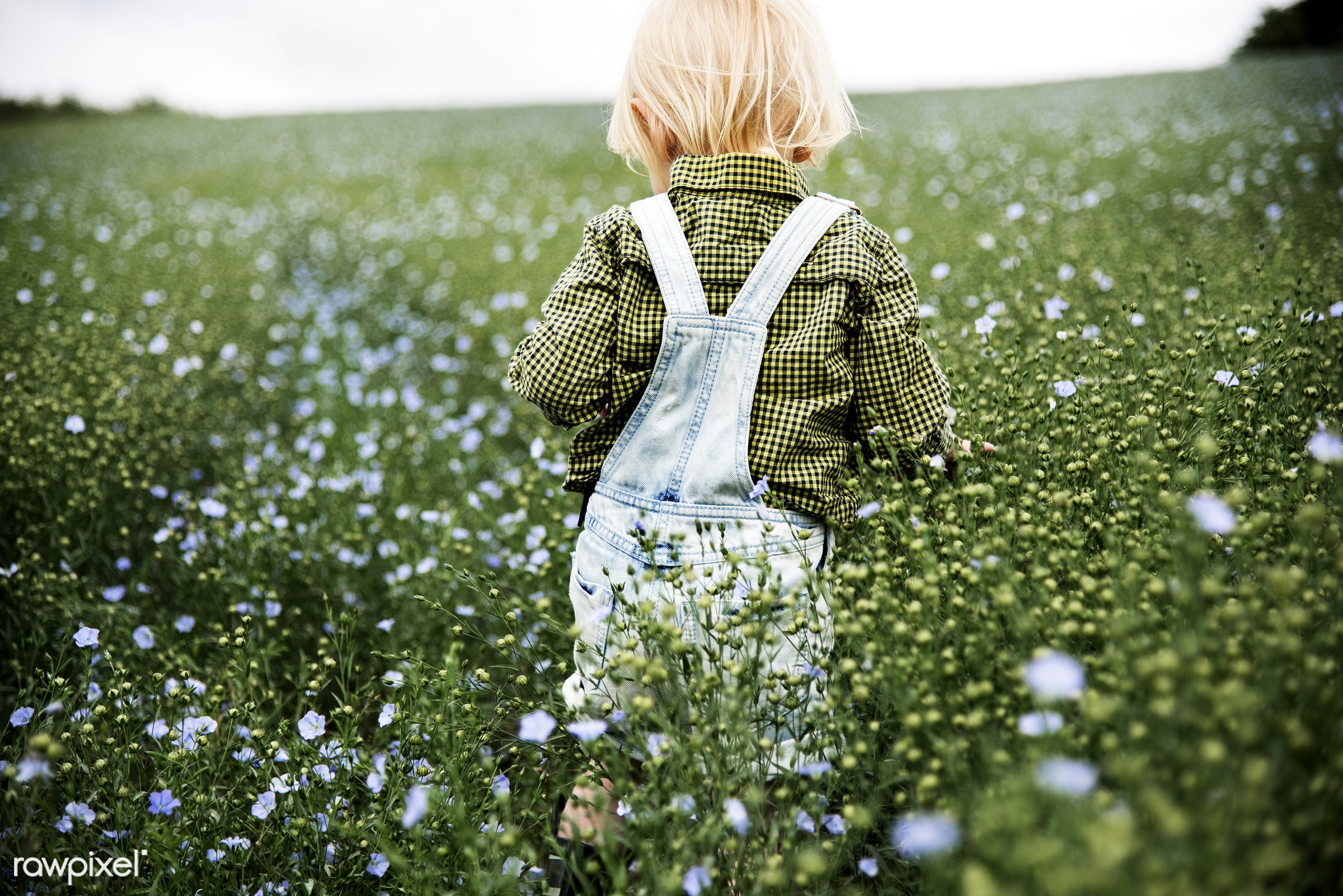 Kid in the garden - nature, purple, toddler, alone, backyard, bloom, blooming, blue, botanical, botany, boy, cheerful, child...