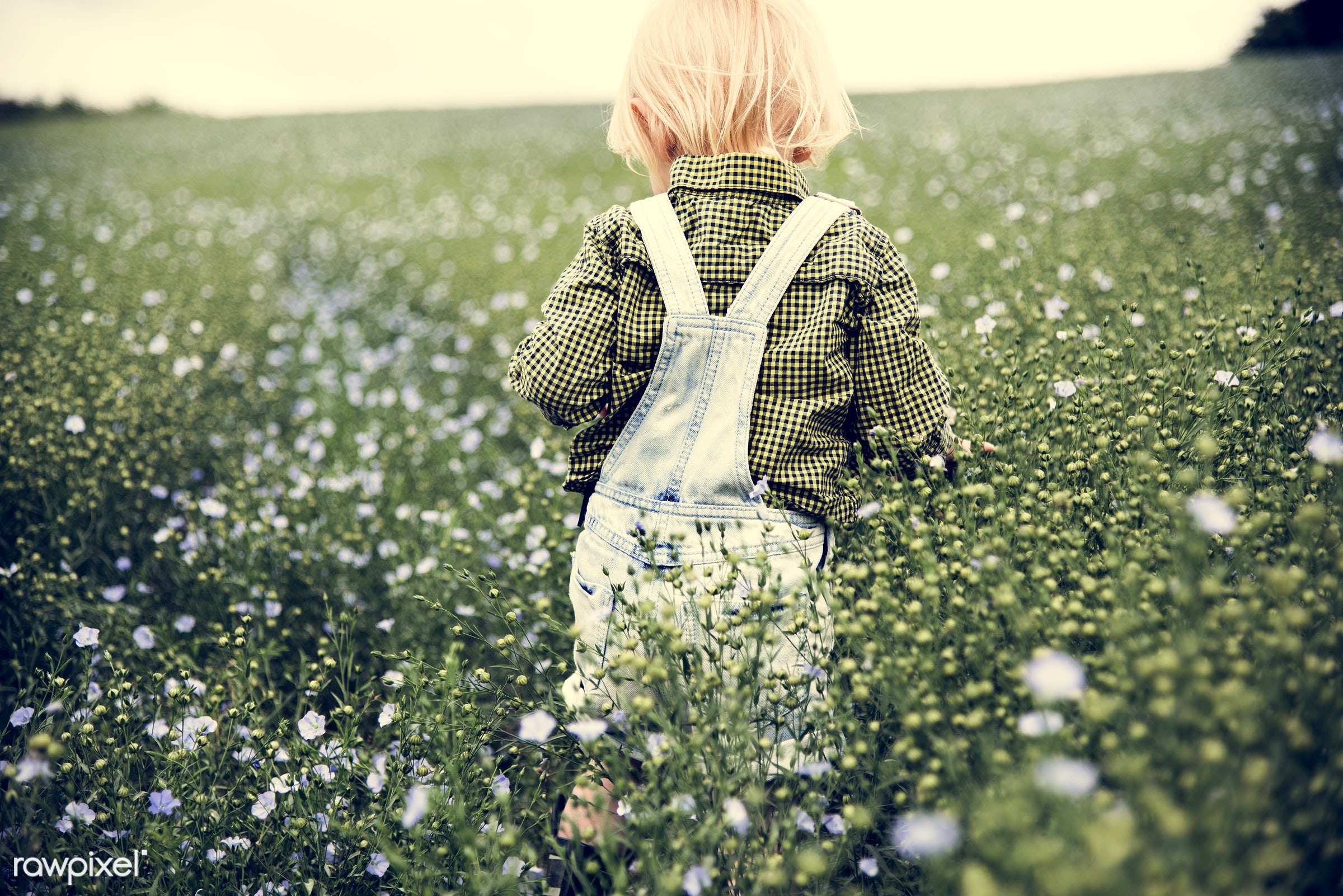 arboretum, backyard, bloom, blooming, botanical, botany, boy, country, countryside, cultivate, cultivating, field, flora,...