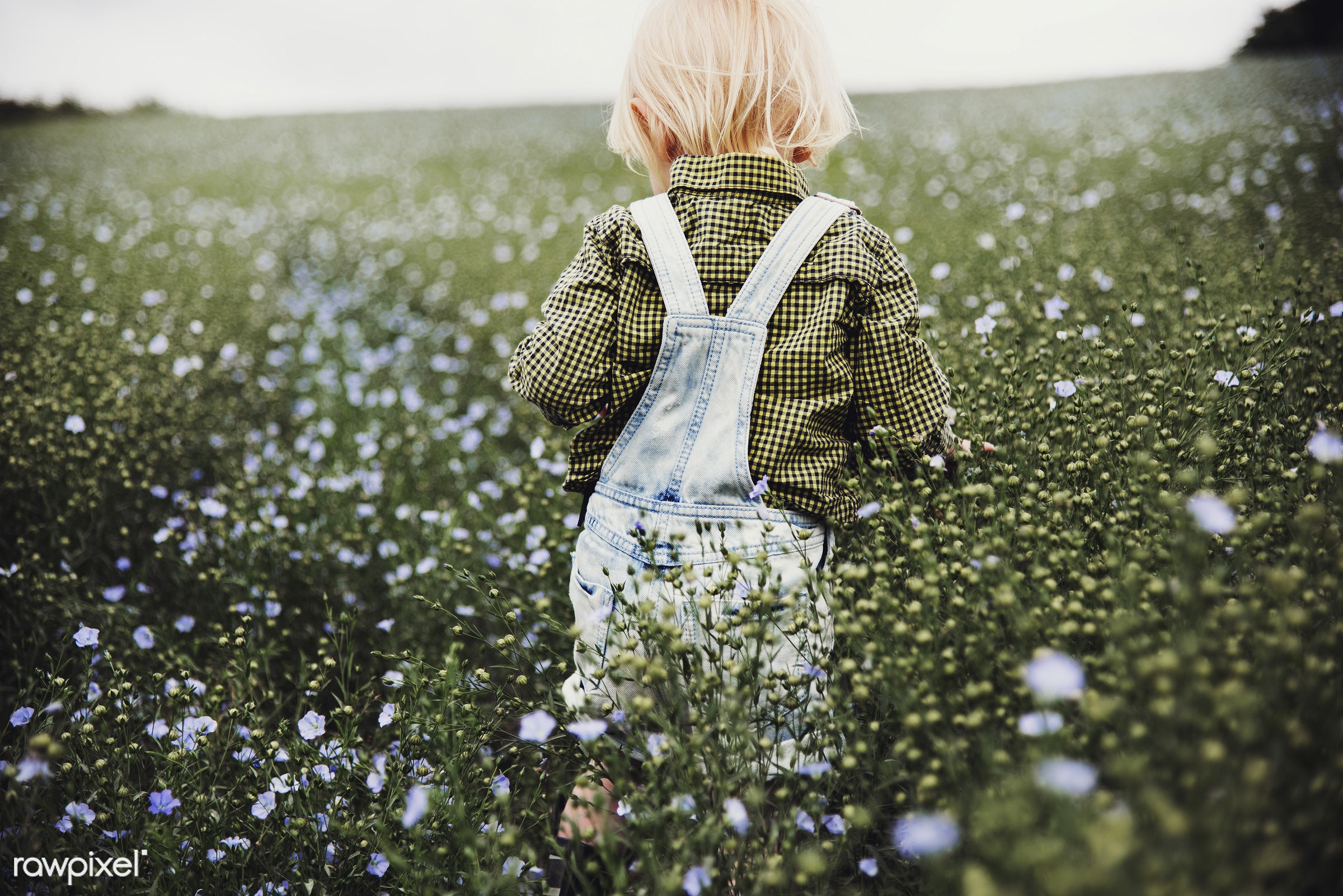 arboretum, backyard, bloom, blooming, botanical, botany, boy, child, country, countryside, cultivate, cultivating, field,...