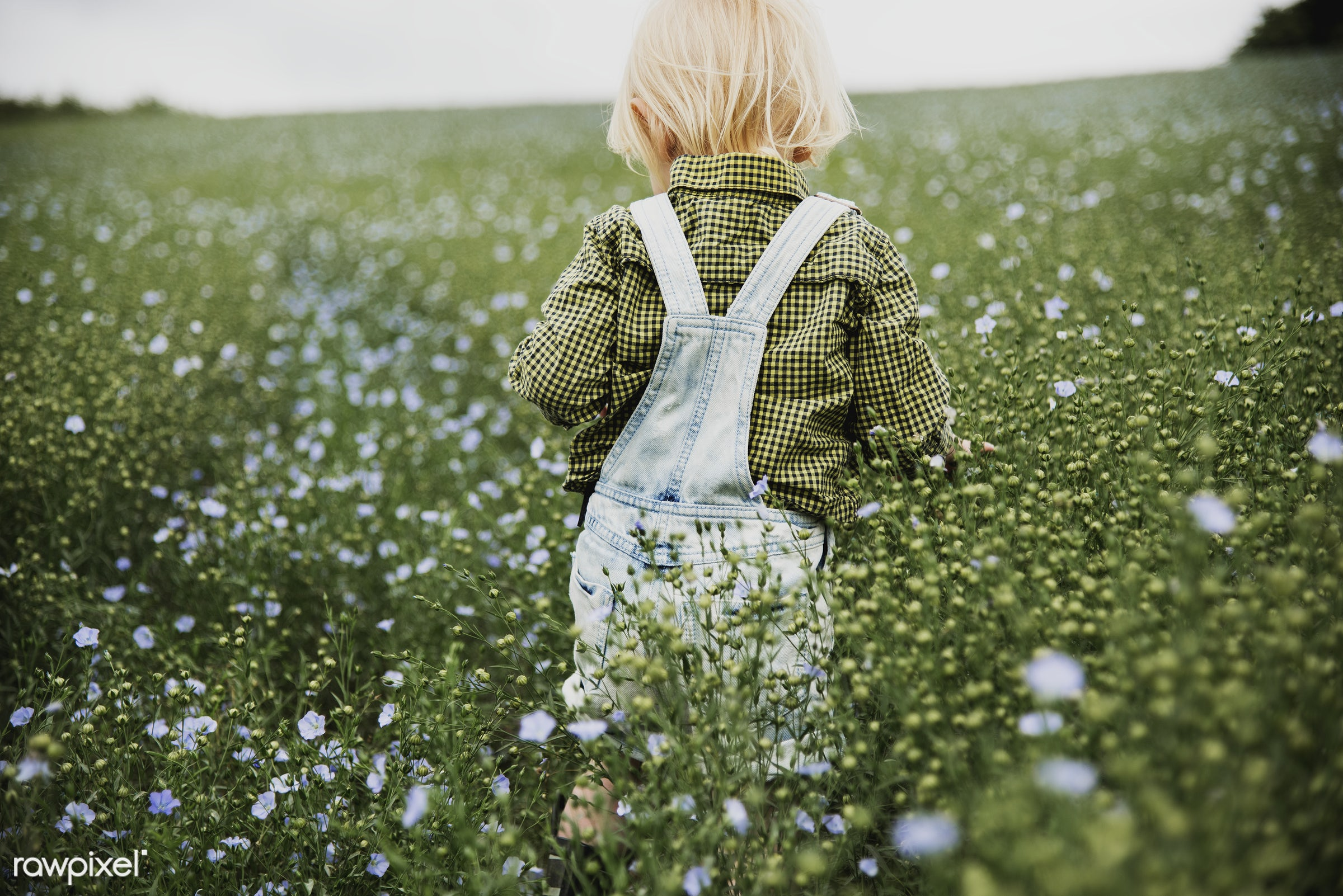 Kid in flower field - alone, backyard, bloom, blooming, botanical, botany, boy, caucasian, cheerful, countryside, cultivate...