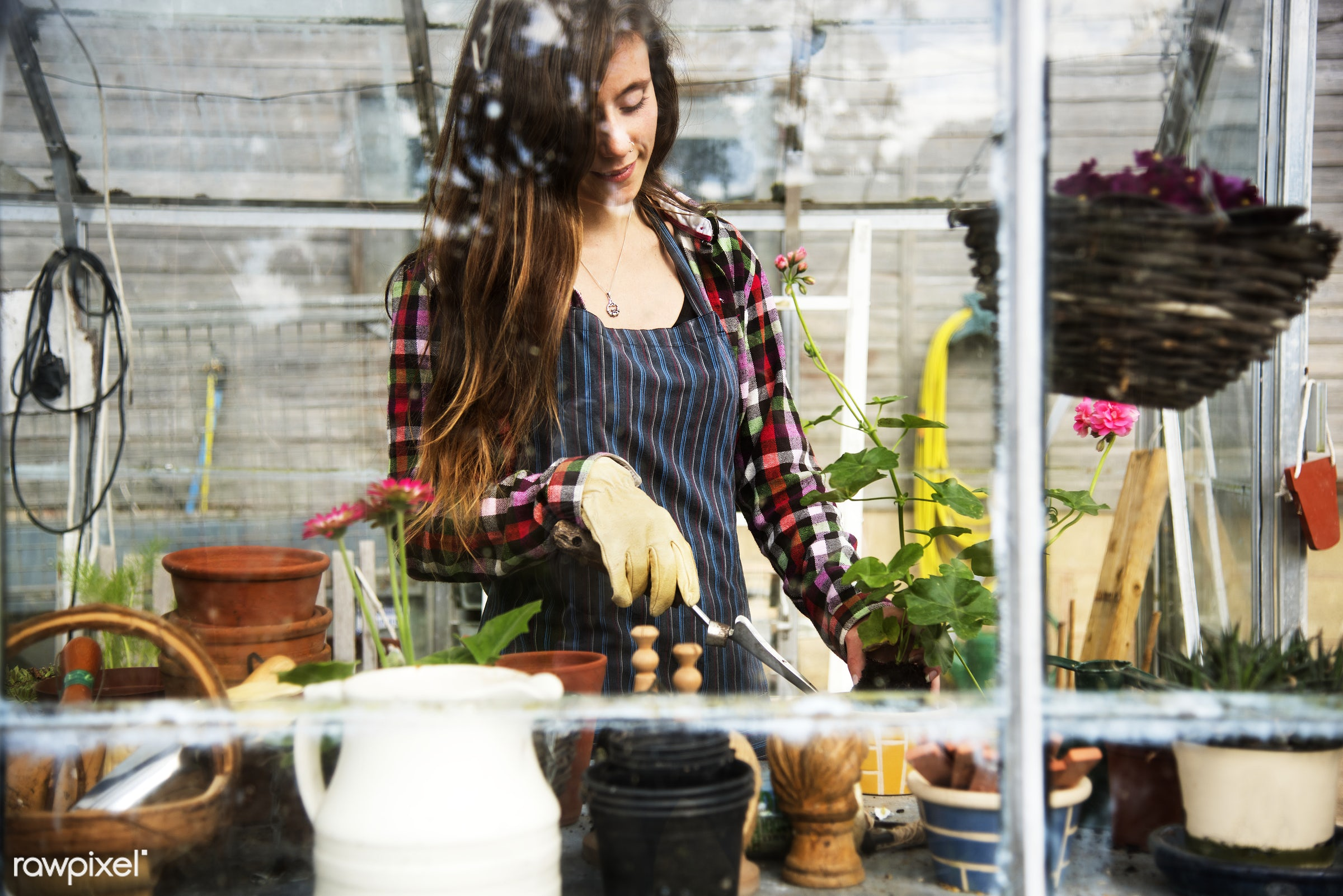 Young woman in the glass greenhouse - agriculture, backyard, bloom, botanical, botany, building, cares, countryside,...