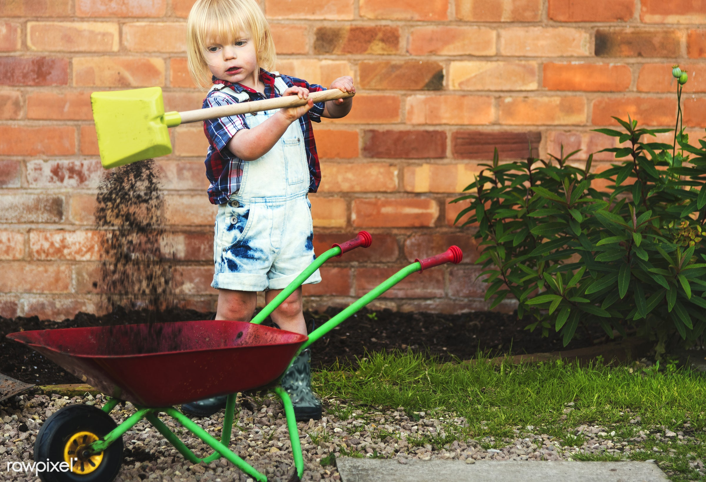 Kid in the garden - alone, backyard, blooming, botanical, botany, boy, cheerful, child, children, countryside, cultivate,...