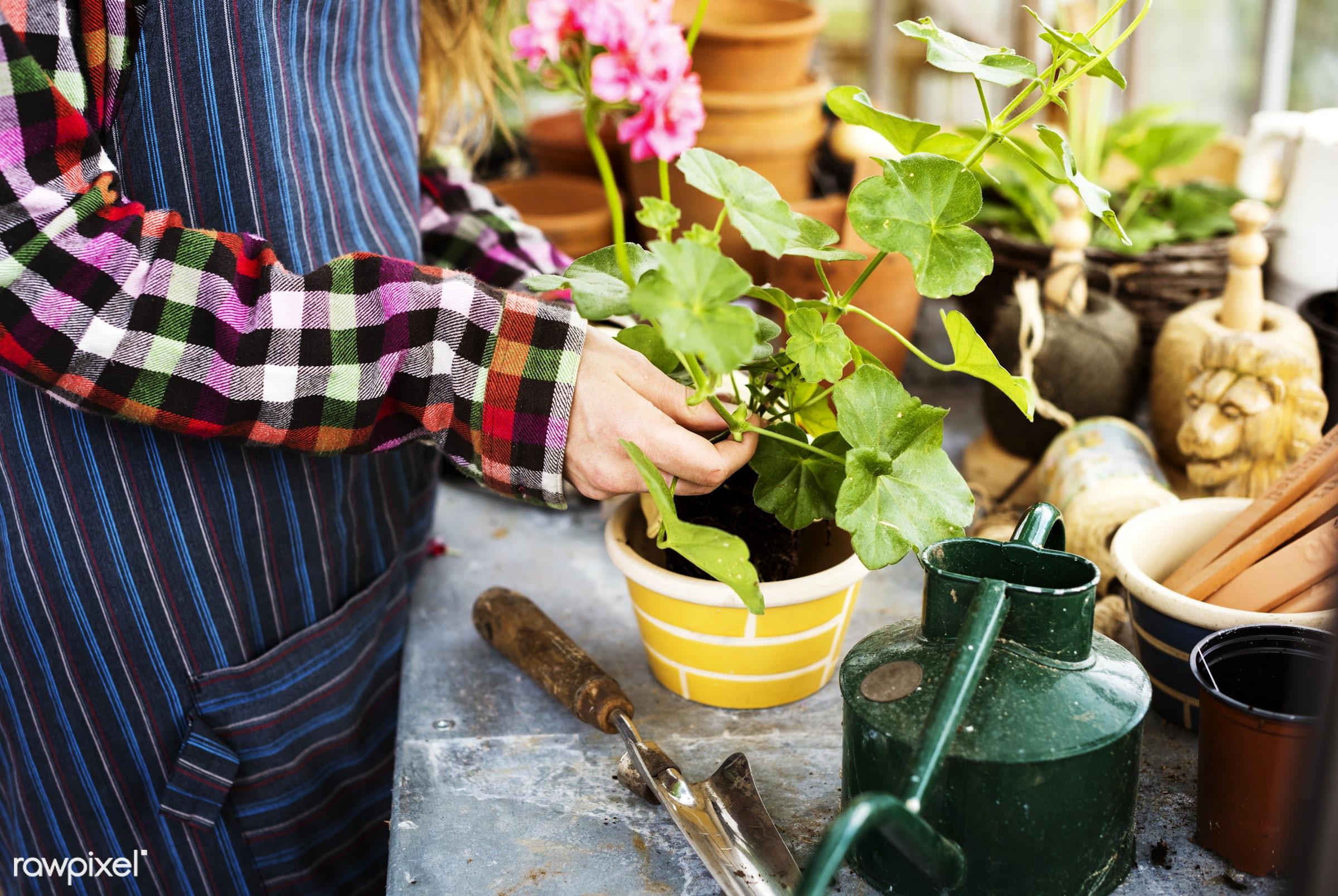agriculture, arboretum, backyard, bloom, botanical, botany, cultivate, cultivated, cultivating, cultivation, ecology,...
