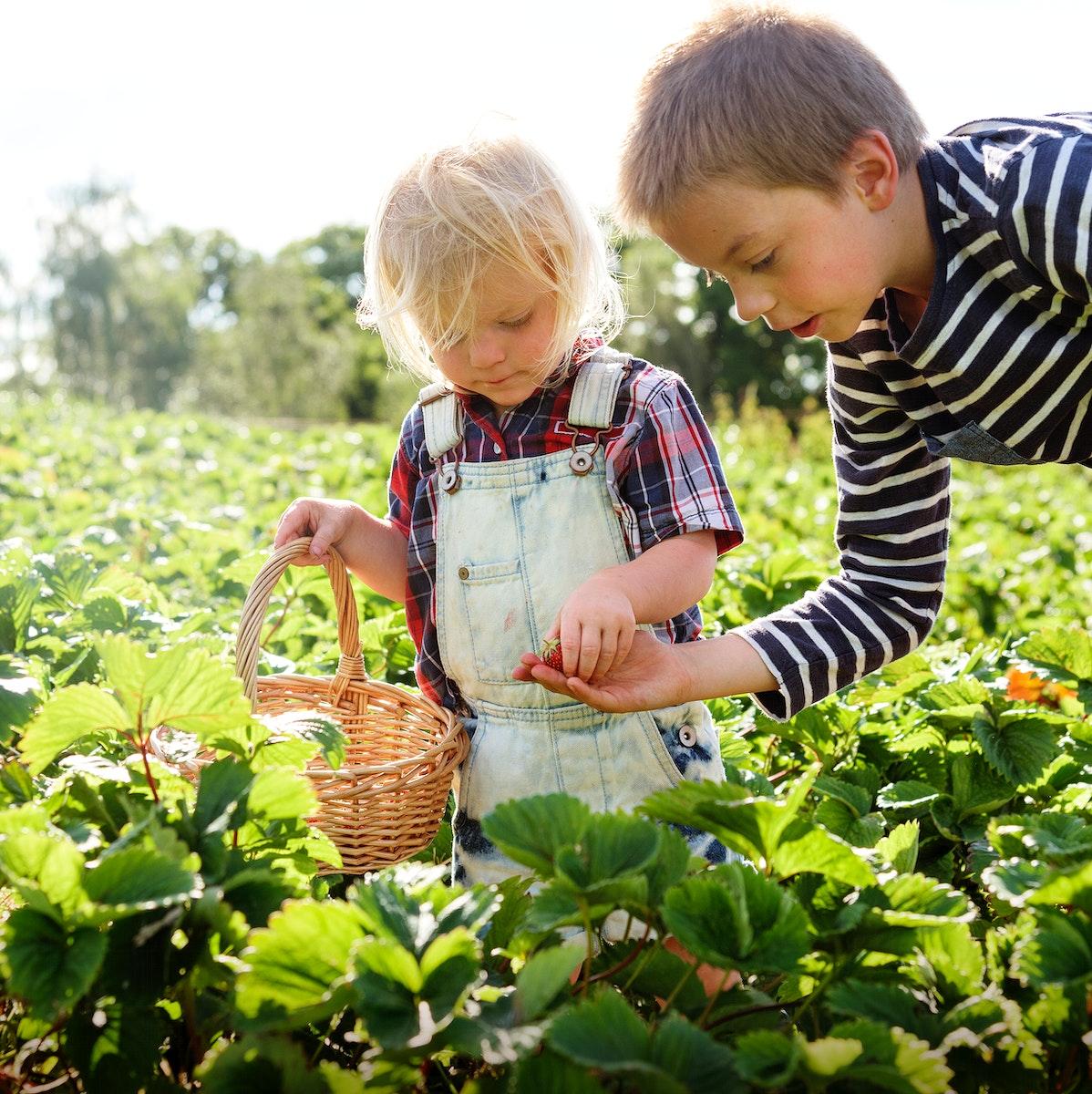 Kids in strawberry farm