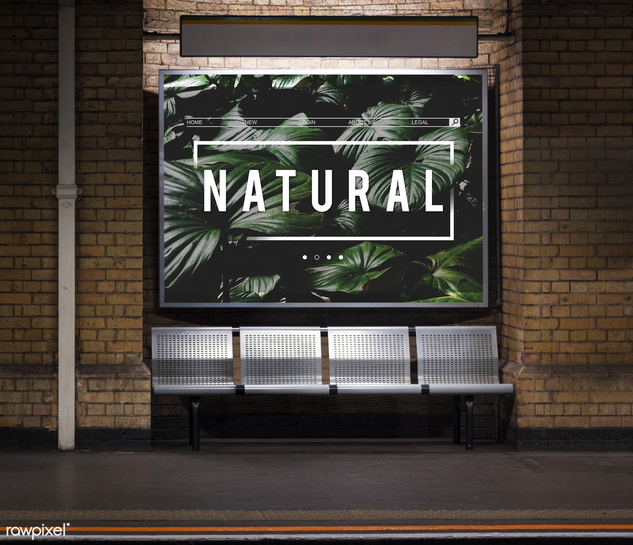 bricks, brickswall, clean, earth, ecology, environment, flora, floral, flower, fresh, freshness, go green, green, life, lush...