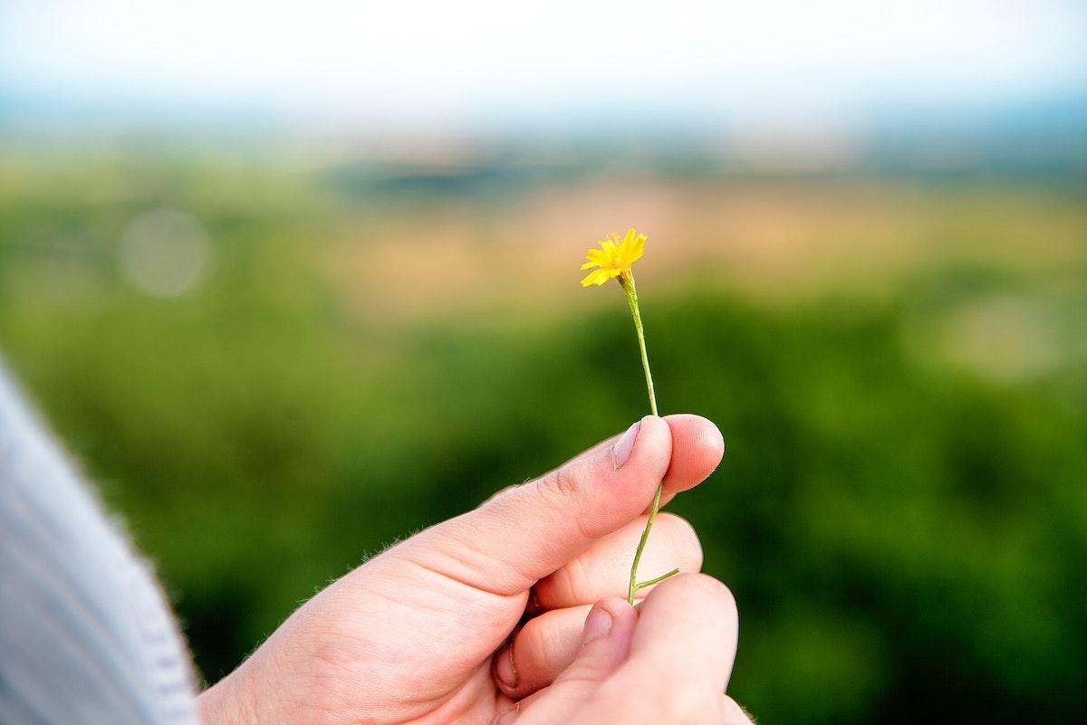Closeup of hand holding yellow flower