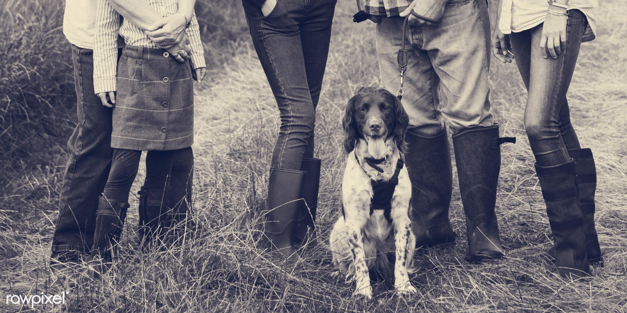 bonding, care, casual, cheerful, cocker spaniel, dog, enjoyment, environmental, family, field, fun, garden, girl, grassland...