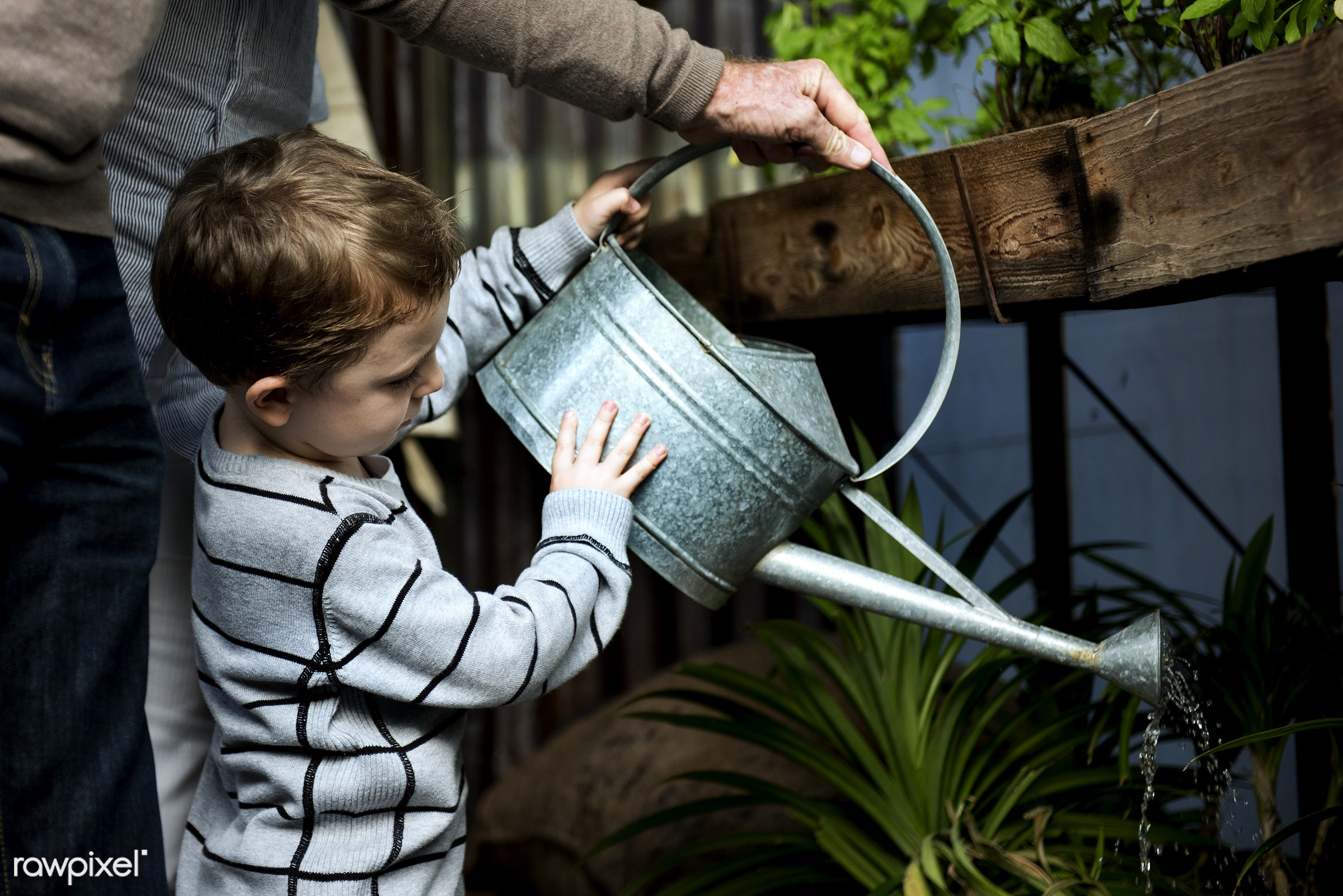 Man helping a young boy water the plants - young, kid, helping, learning, hobbies, watering, can, gardening, activity,...