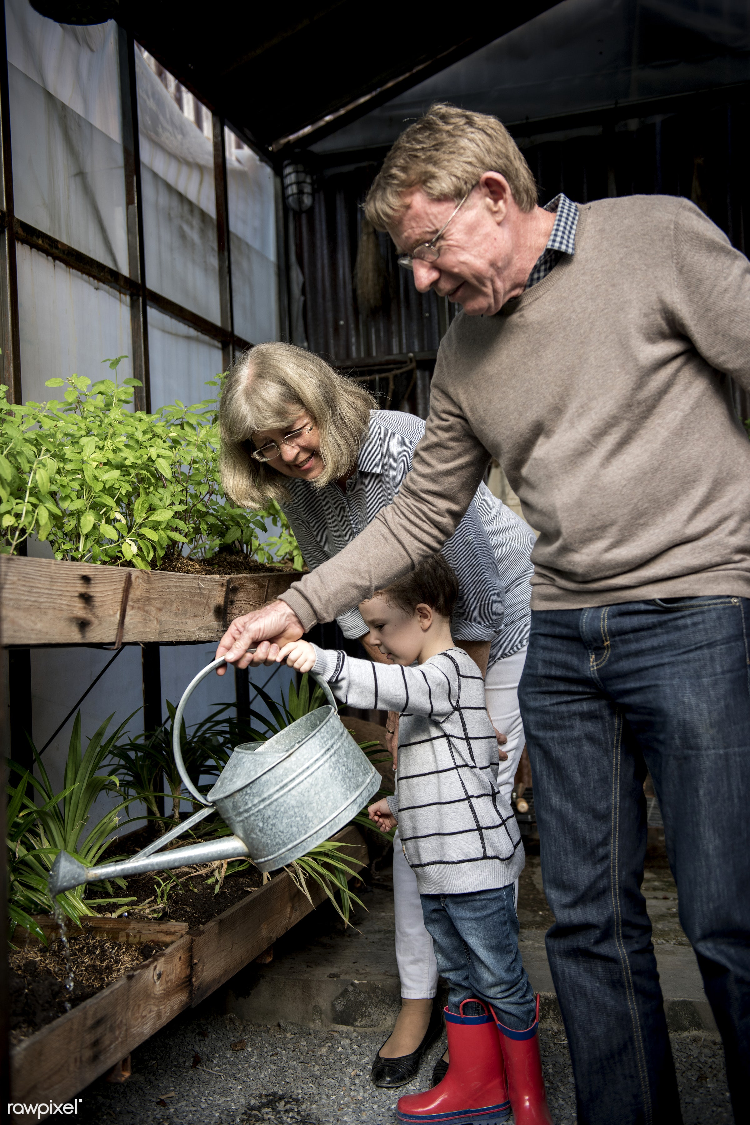 Grandparents helping a young boy water the plants - activity, can, child, environment, family, garden, gardening,...
