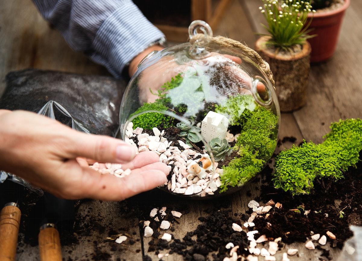 Hands making a terrarium with miniature plants